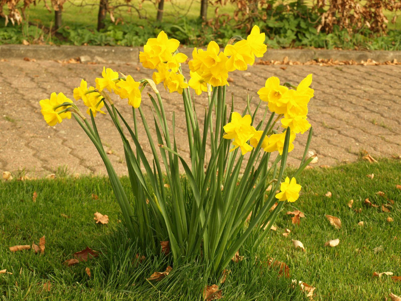 Pflanzen-Blumen-Foto_Textur_B_P4232678