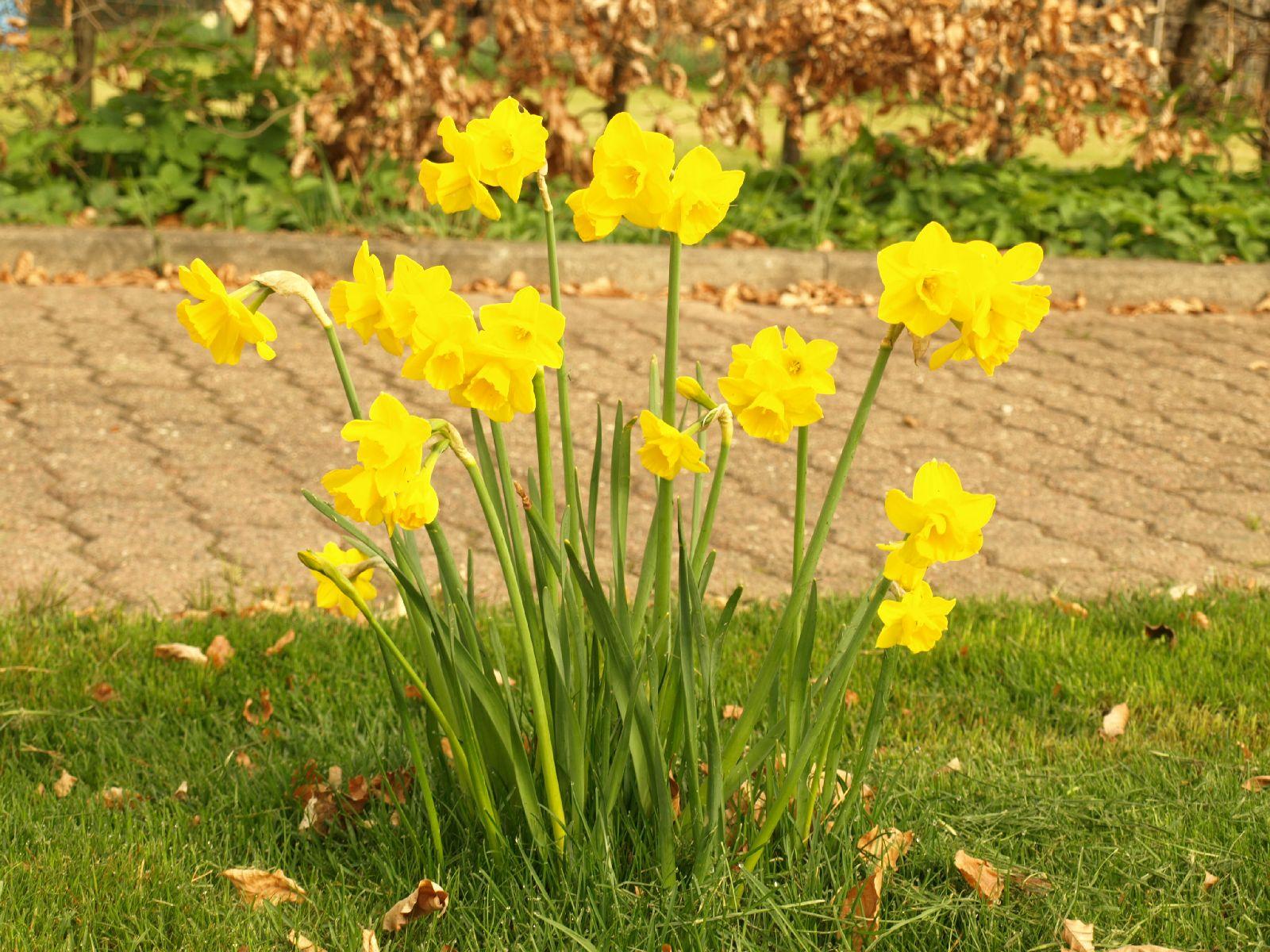 Pflanzen-Blumen-Foto_Textur_B_P4232679