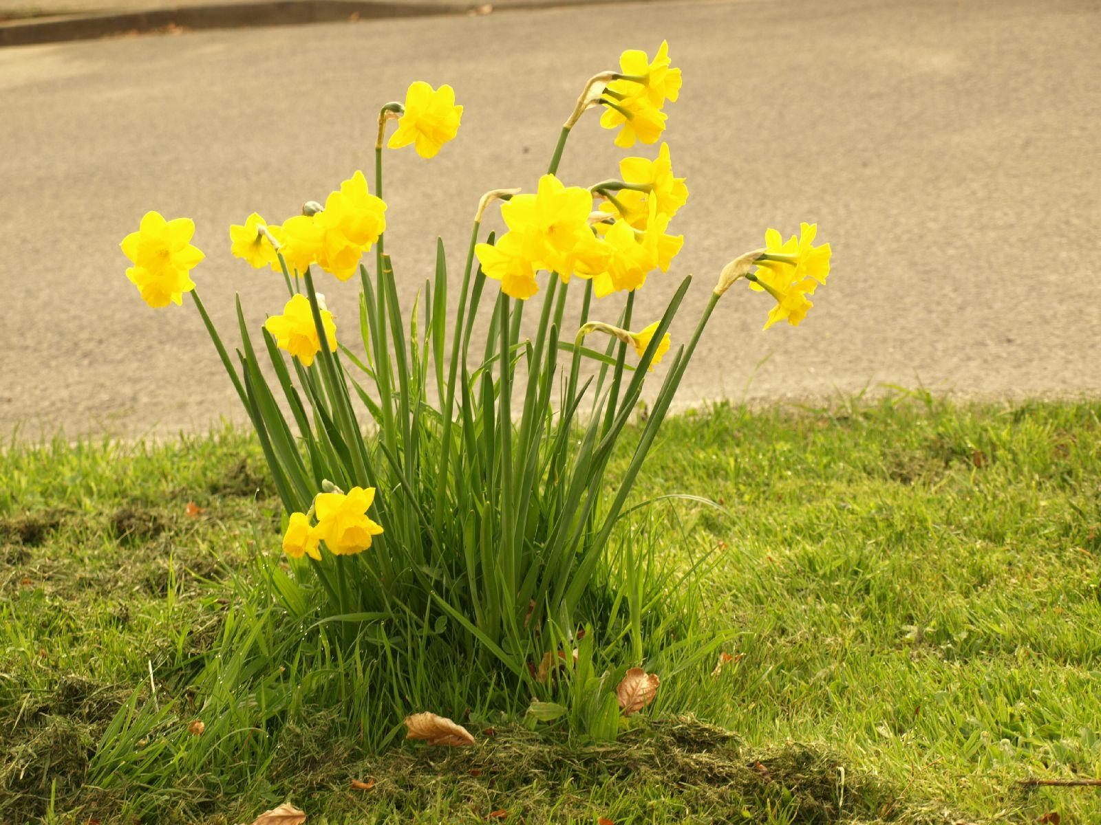 Pflanzen-Blumen-Foto_Textur_B_P4232680
