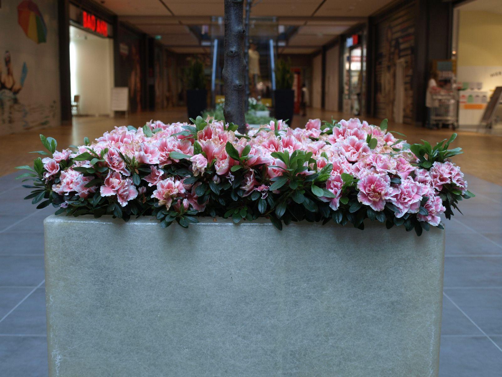 Pflanzen-Blumen-Foto_Textur_B_P4282864