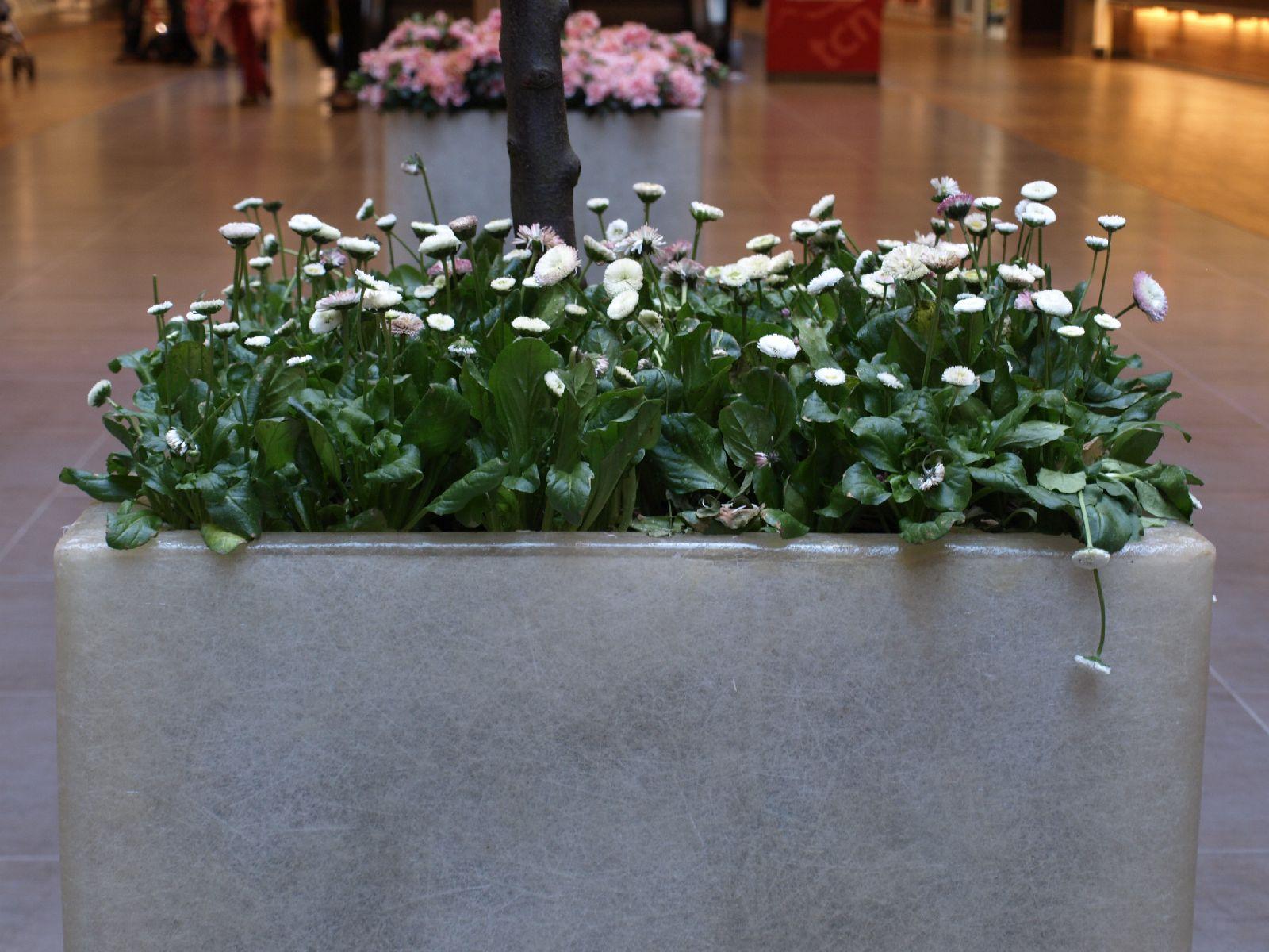 Pflanzen-Blumen-Foto_Textur_B_P4282865
