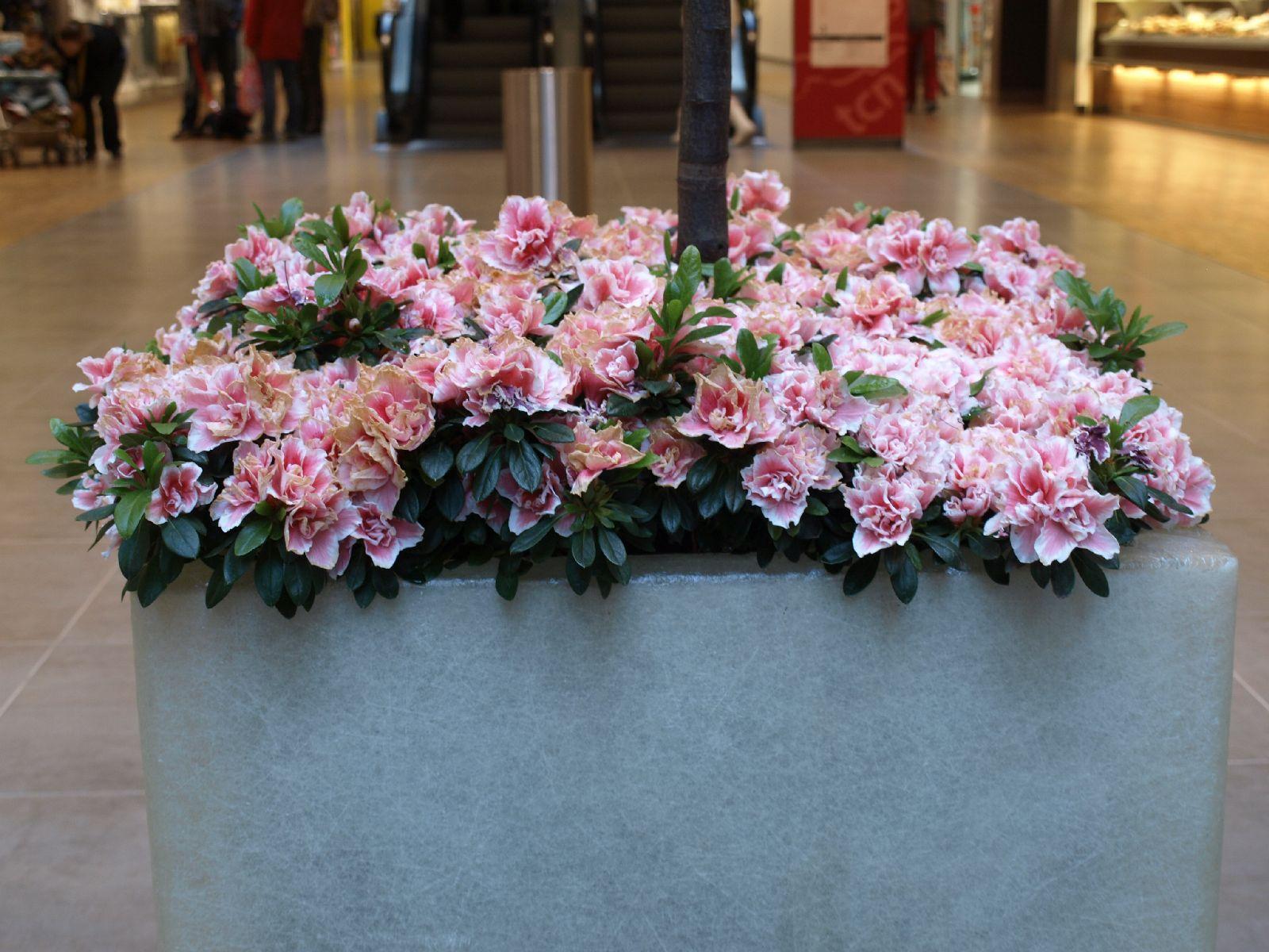 Pflanzen-Blumen-Foto_Textur_B_P4282866