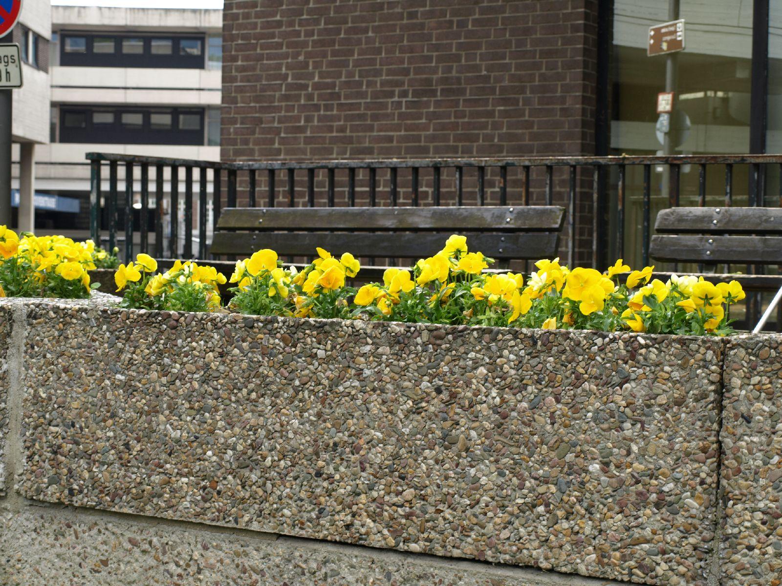 Pflanzen-Blumen-Foto_Textur_B_P5142759