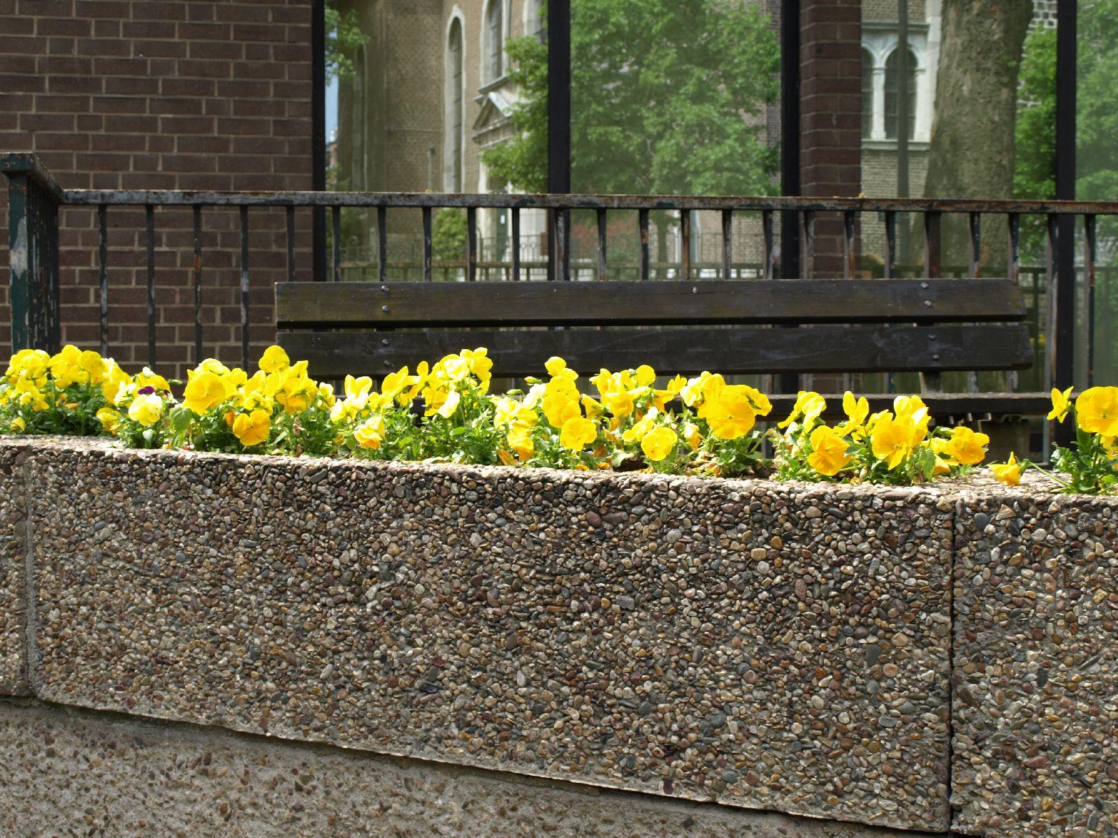 Pflanzen-Blumen-Foto_Textur_B_P5142760
