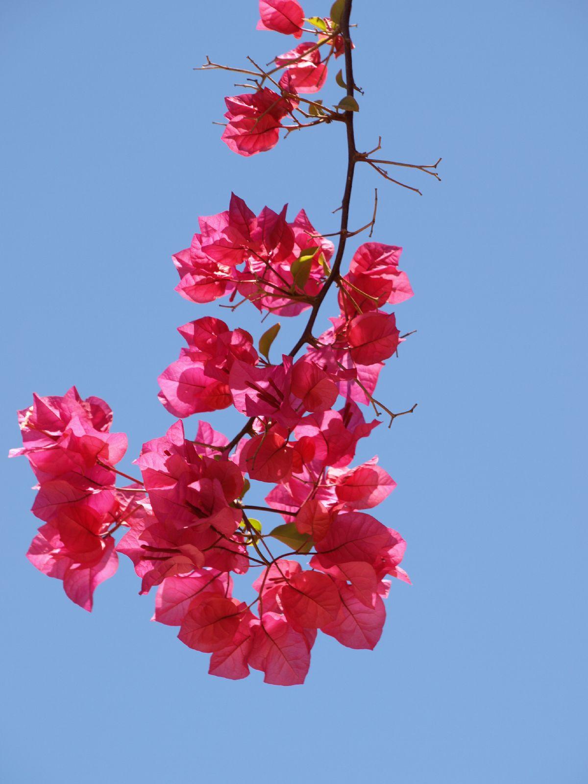 Pflanzen-Blumen-Foto_Textur_B_P5224267