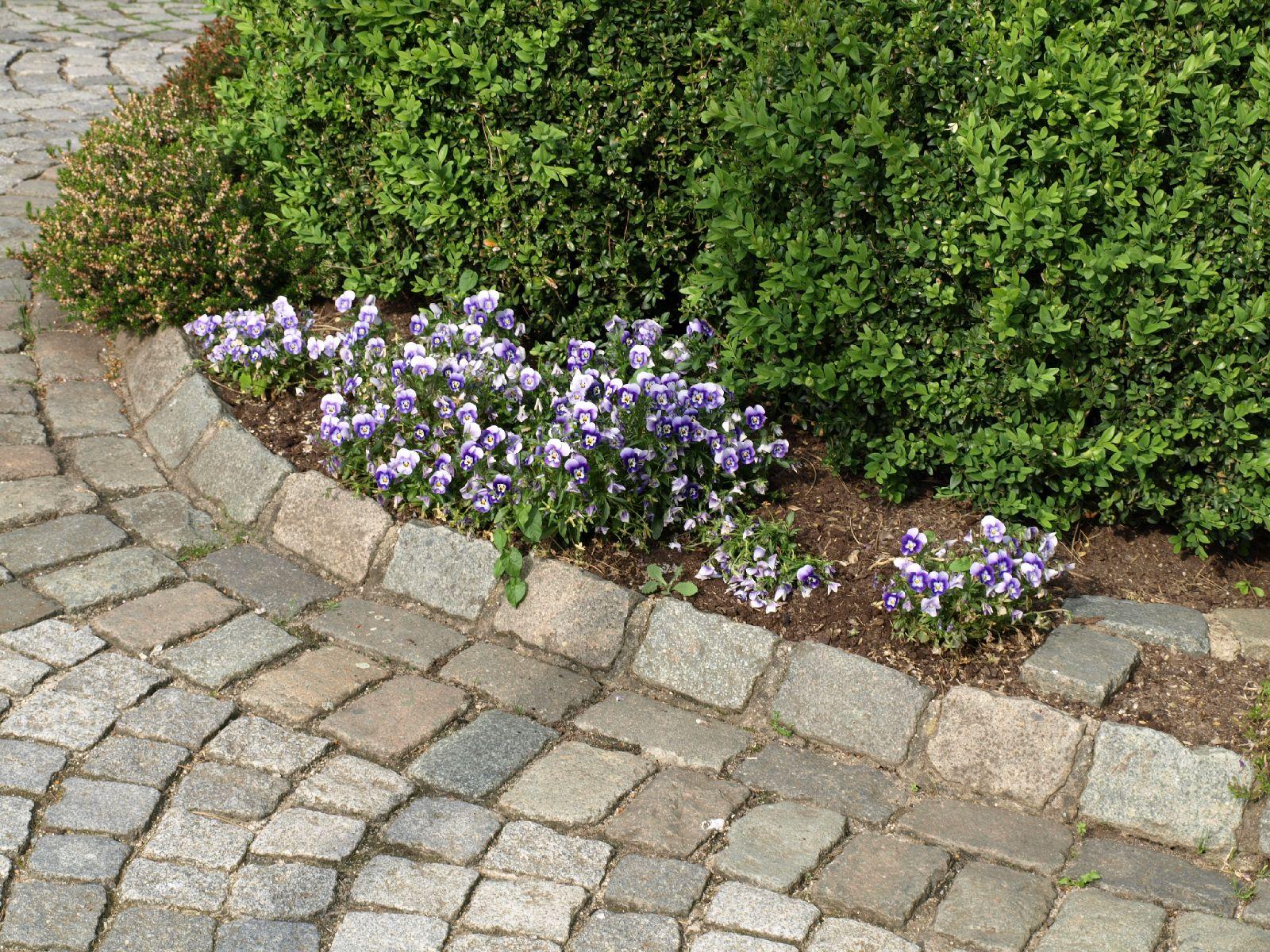 Pflanzen-Blumen-Foto_Textur_B_P5253067