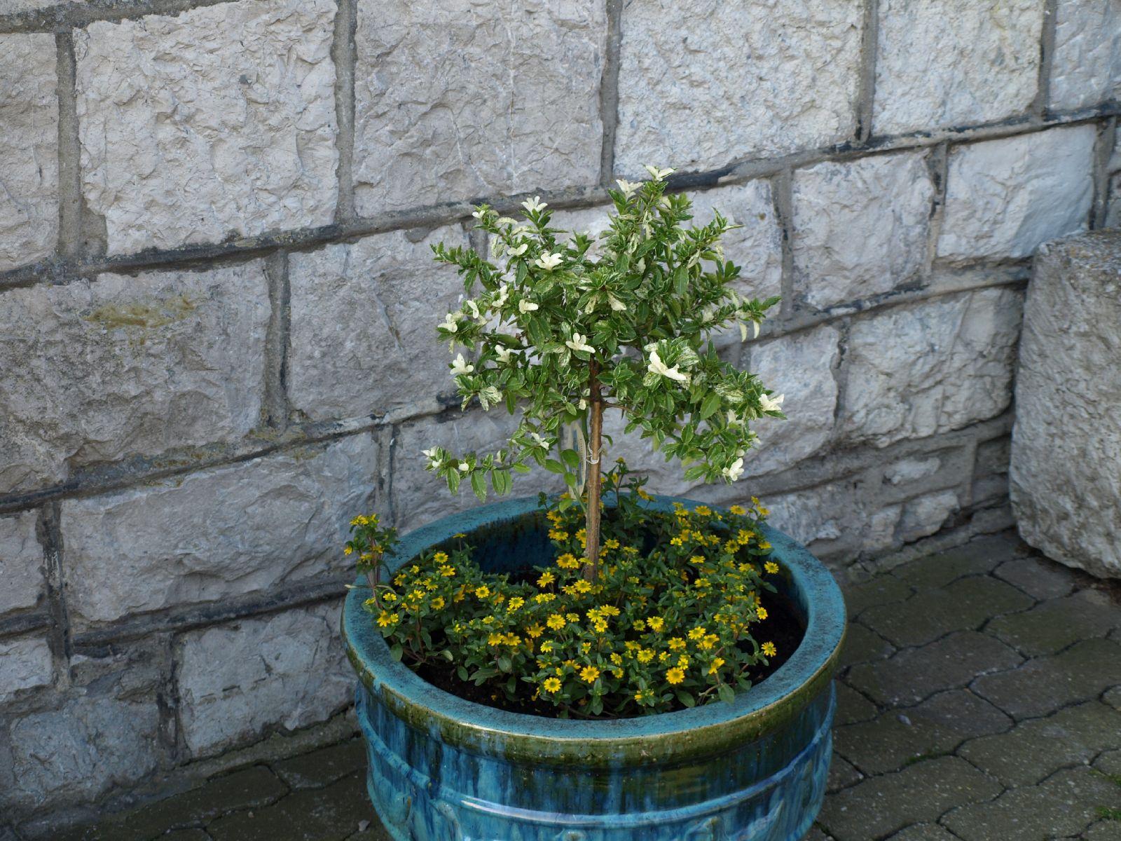 Pflanzen-Blumen-Foto_Textur_B_P6153447