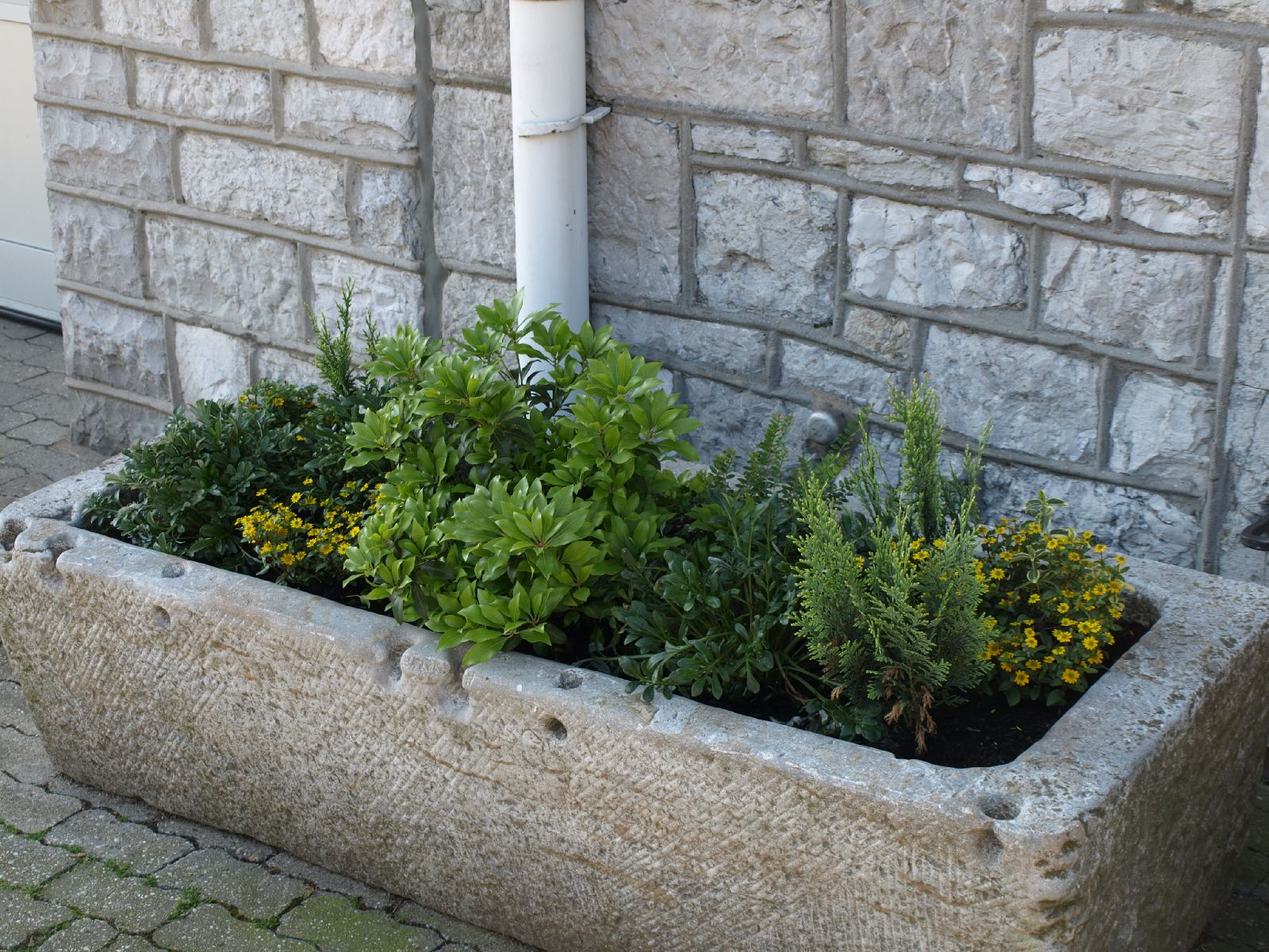 Pflanzen-Blumen-Foto_Textur_B_P6153448