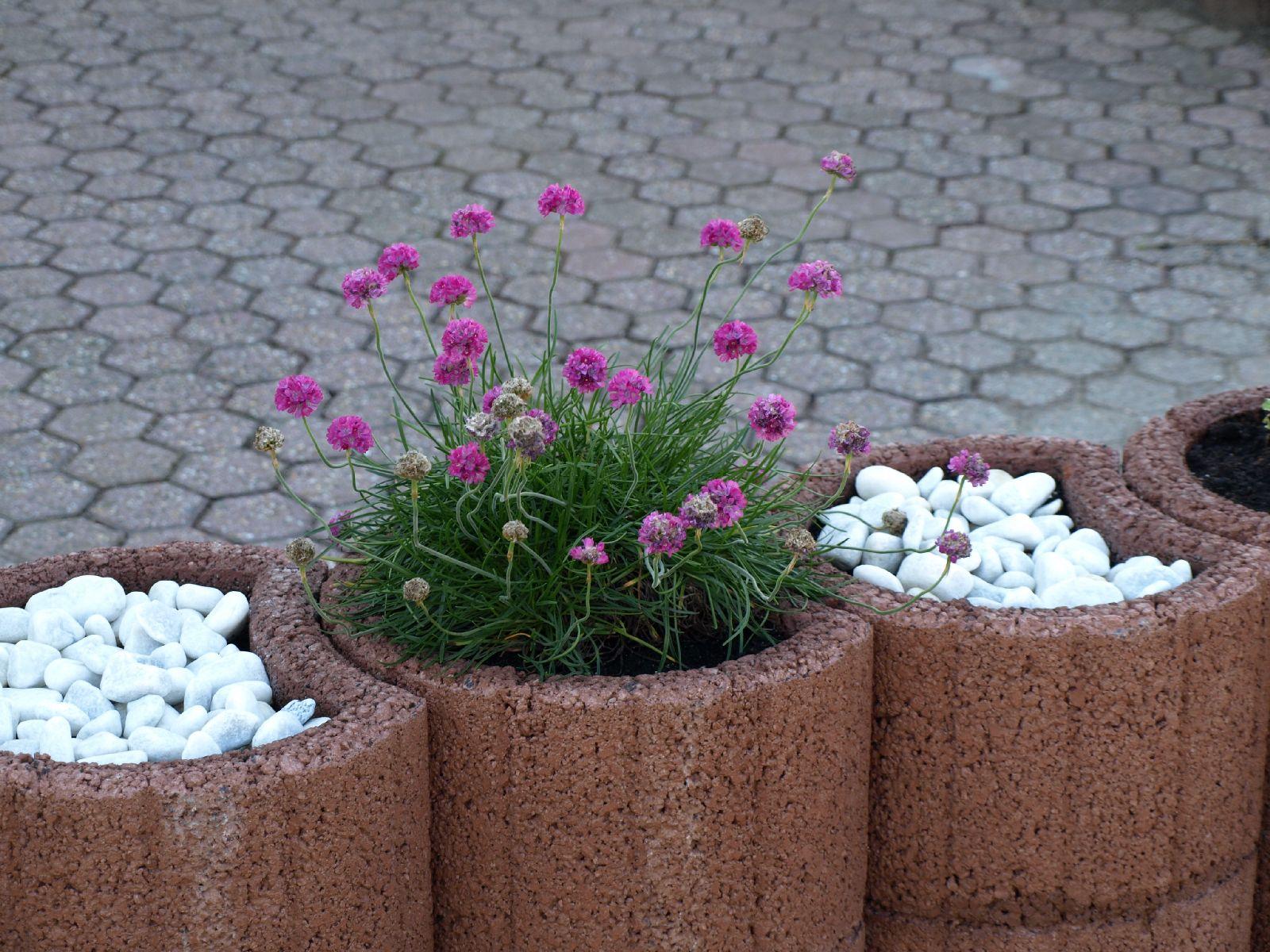 Pflanzen-Blumen-Foto_Textur_B_P6153460