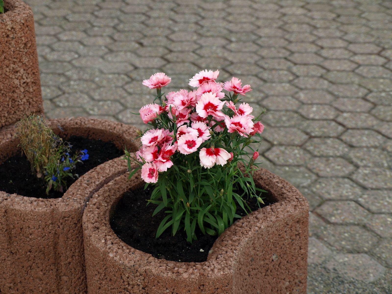 Pflanzen-Blumen-Foto_Textur_B_P6153465