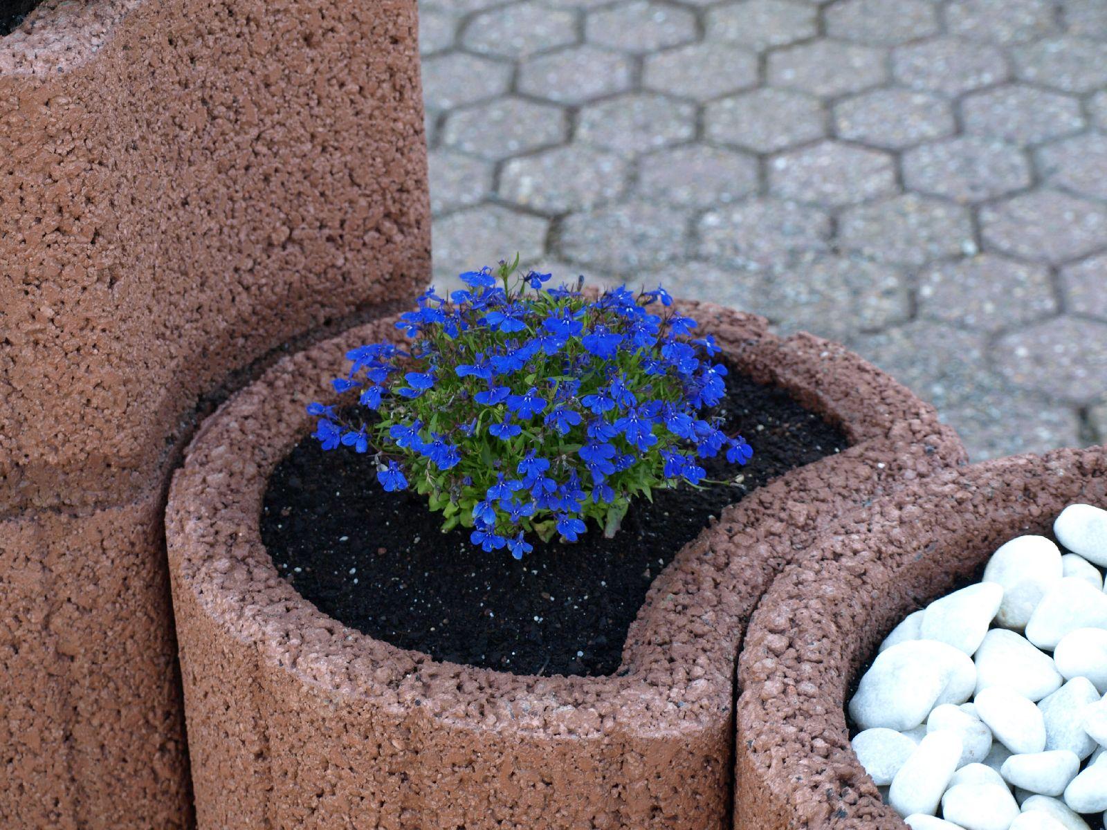 Pflanzen-Blumen-Foto_Textur_B_P6153466