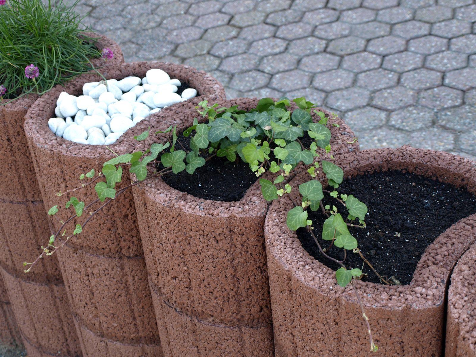 Pflanzen-Blumen-Foto_Textur_B_P6153467