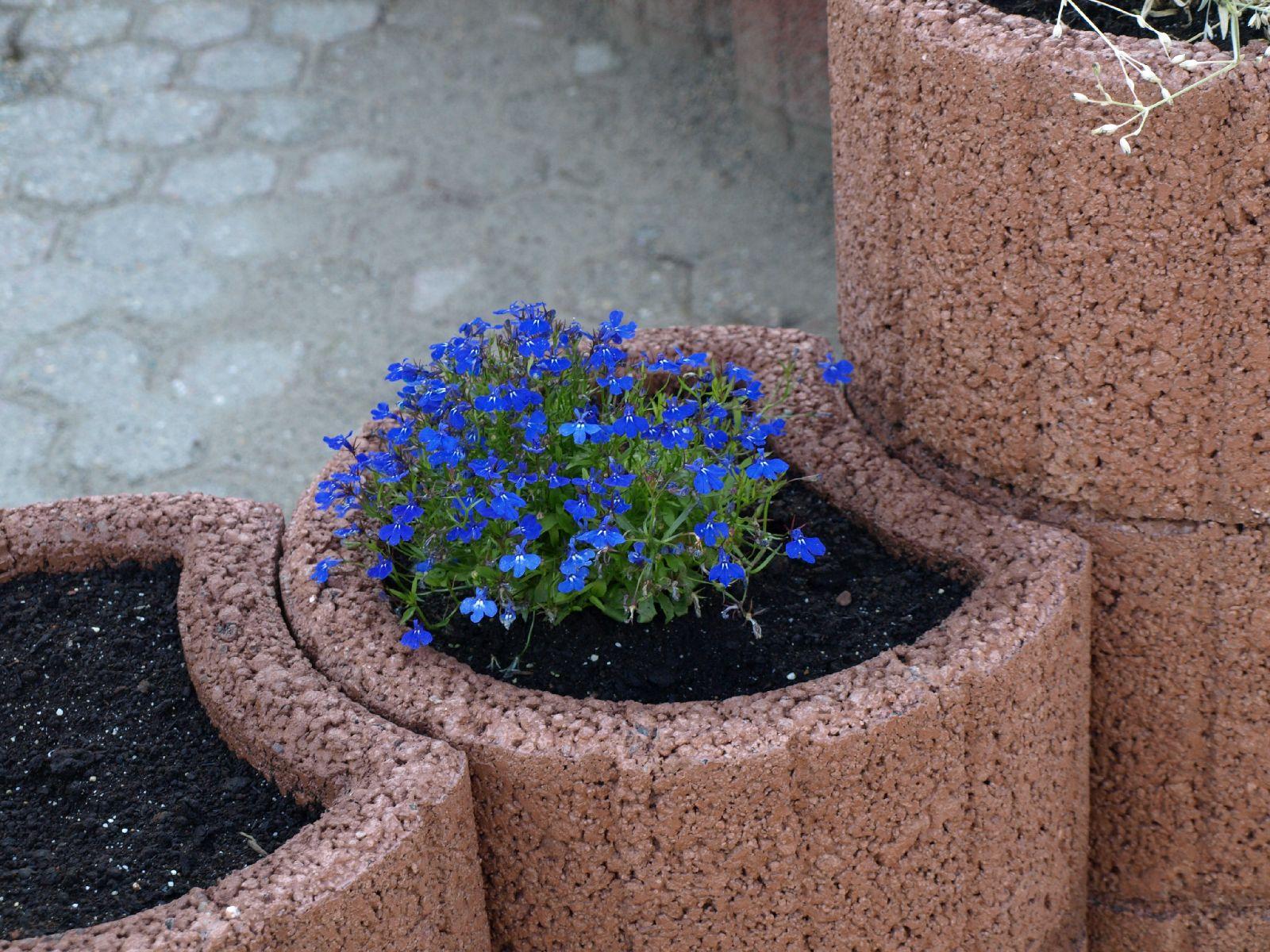 Pflanzen-Blumen-Foto_Textur_B_P6153468