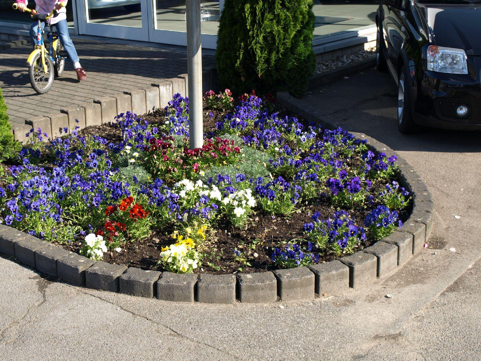 Pflanzen-Blumen-Foto_Textur_B_P6153474