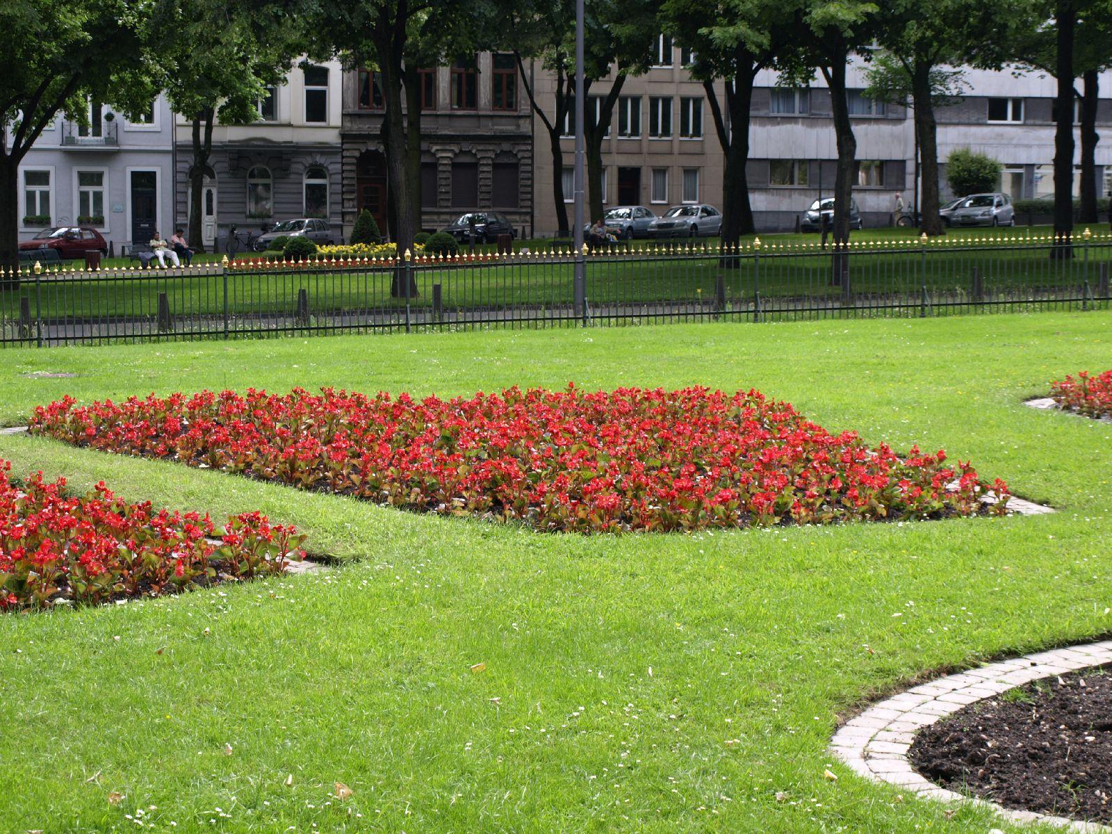 Pflanzen-Blumen-Foto_Textur_B_P6153499