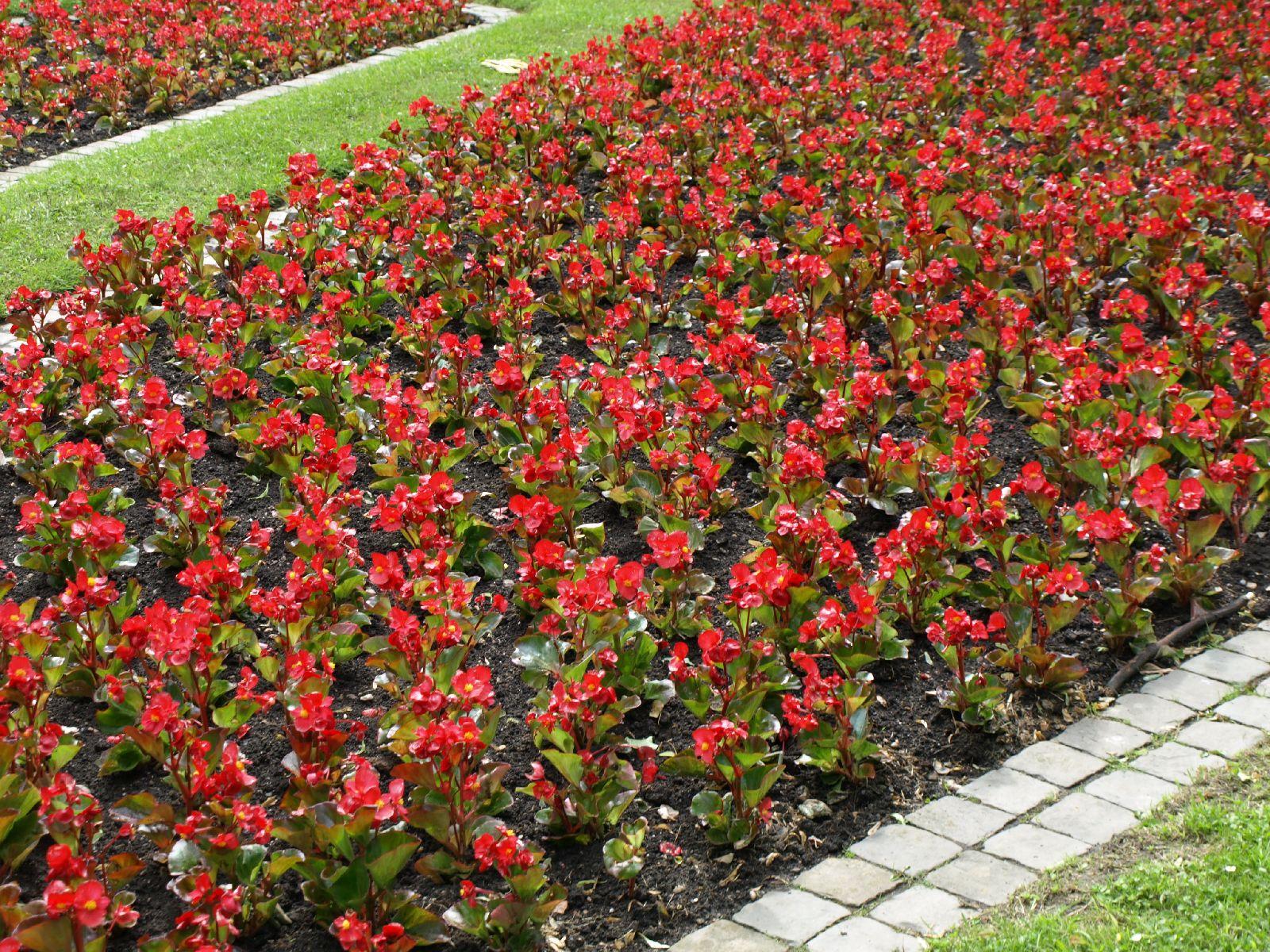 Pflanzen-Blumen-Foto_Textur_B_P6153500