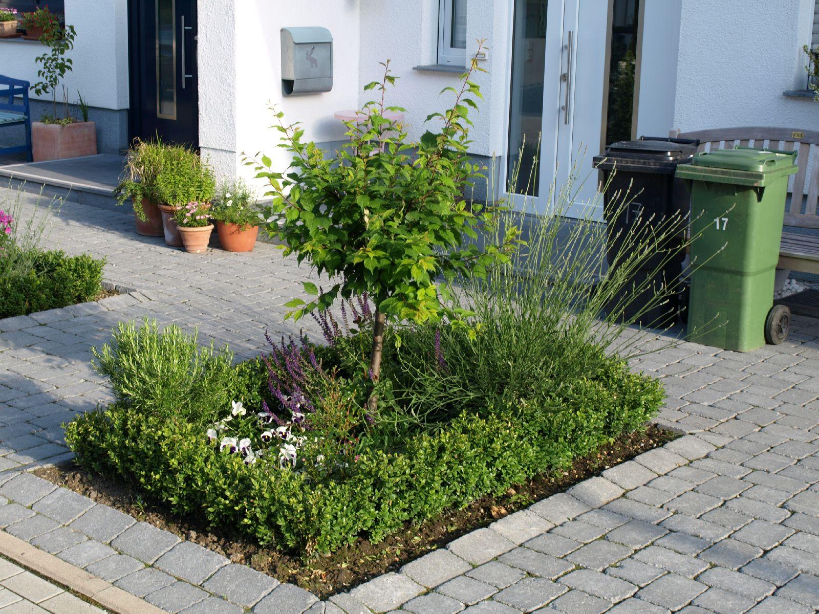 Pflanzen-Blumen-Foto_Textur_B_P6193518