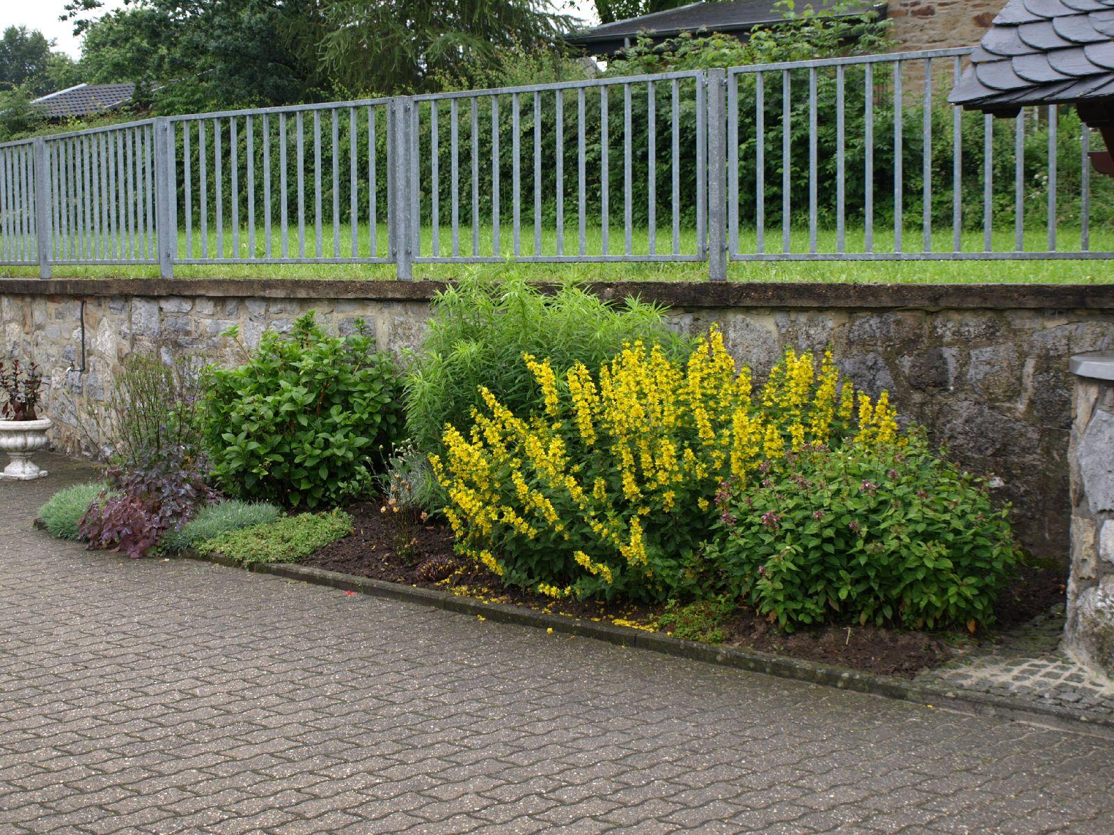 Pflanzen-Blumen-Foto_Textur_B_P6213537