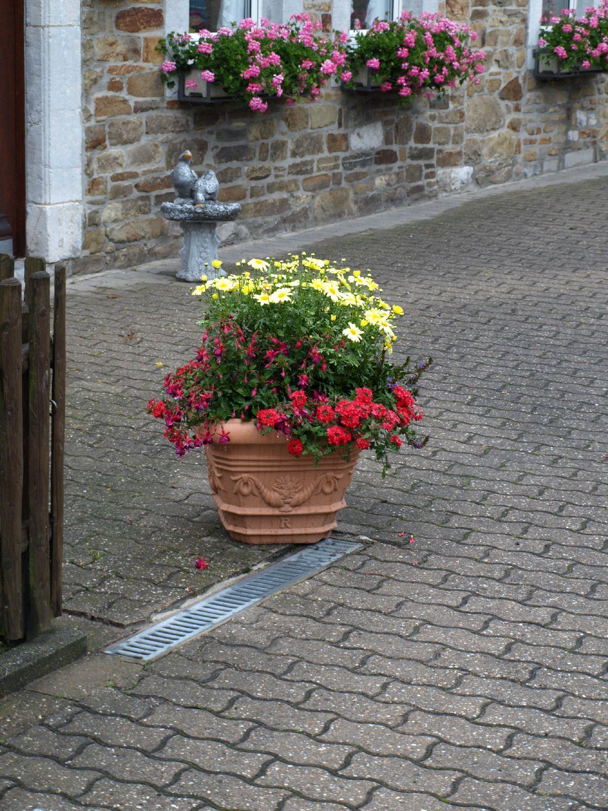 Pflanzen-Blumen-Foto_Textur_B_P6213538