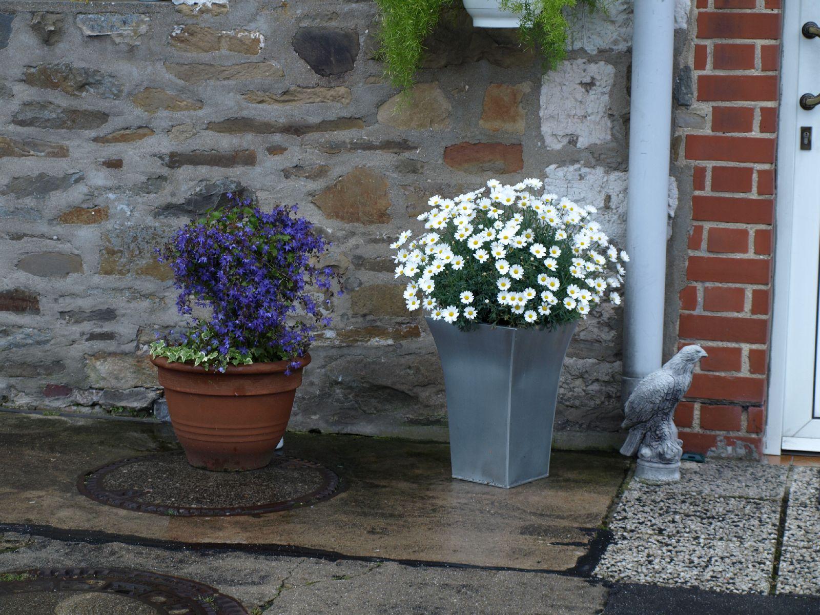 Pflanzen-Blumen-Foto_Textur_B_P6213548