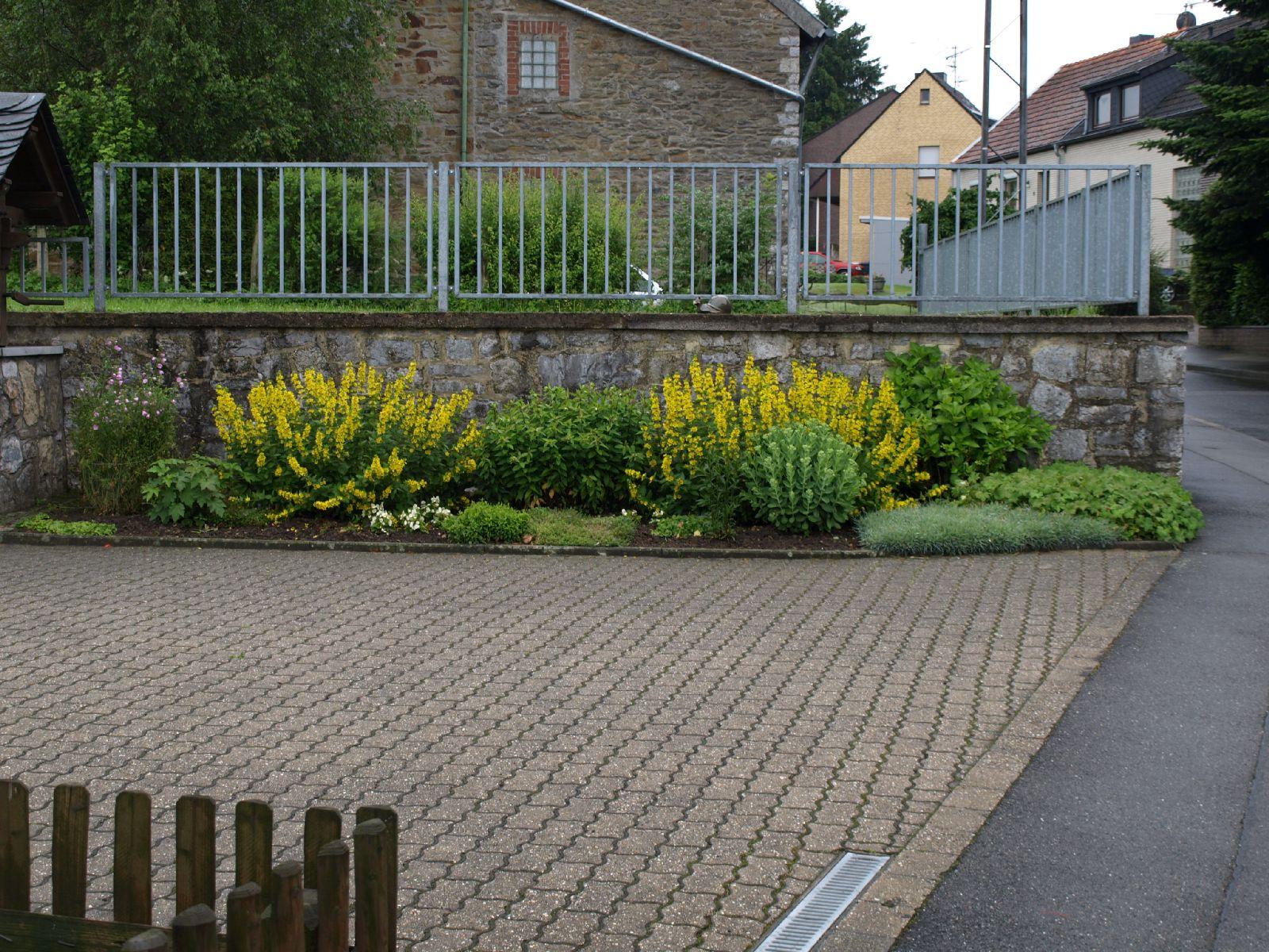 Pflanzen-Blumen-Foto_Textur_B_P6213550