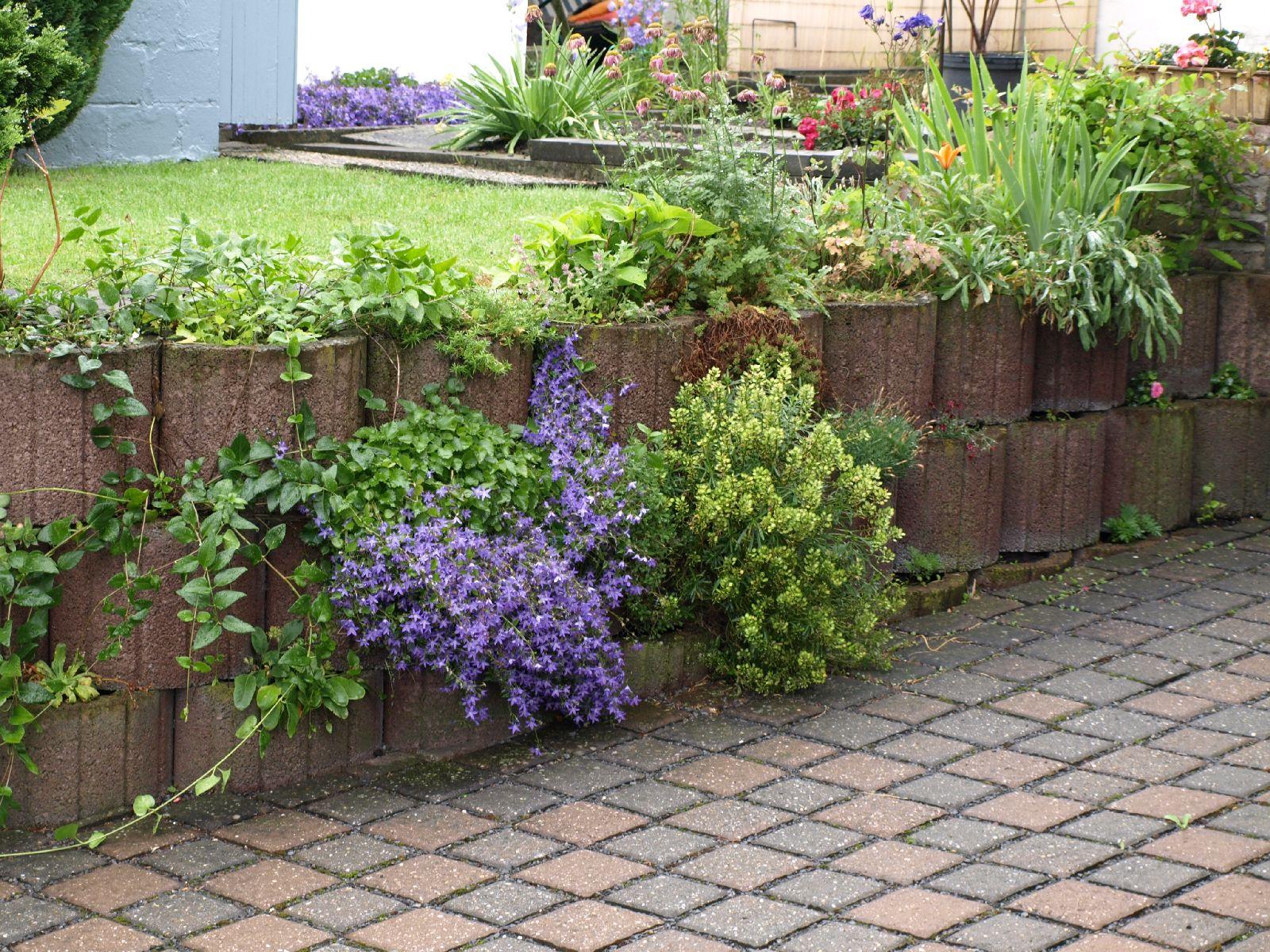 Pflanzen-Blumen-Foto_Textur_B_P6213551