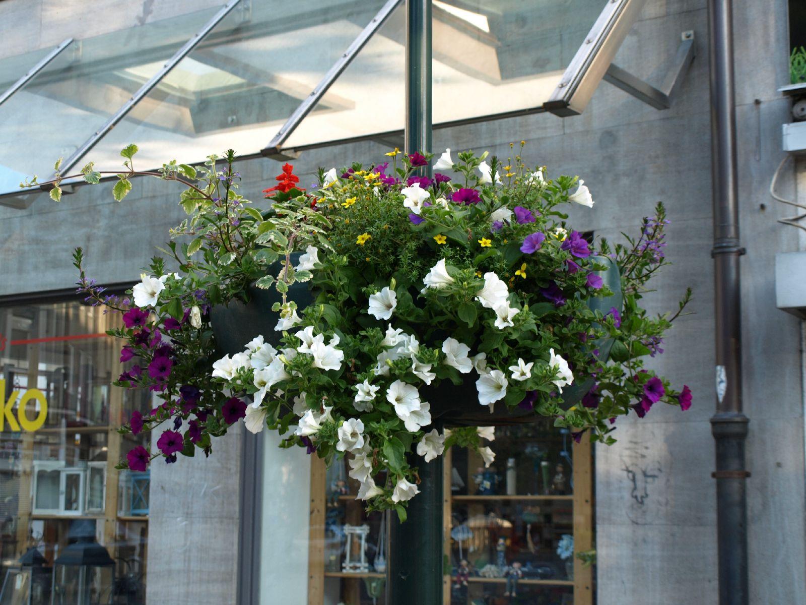 Pflanzen-Blumen-Foto_Textur_B_P6223568