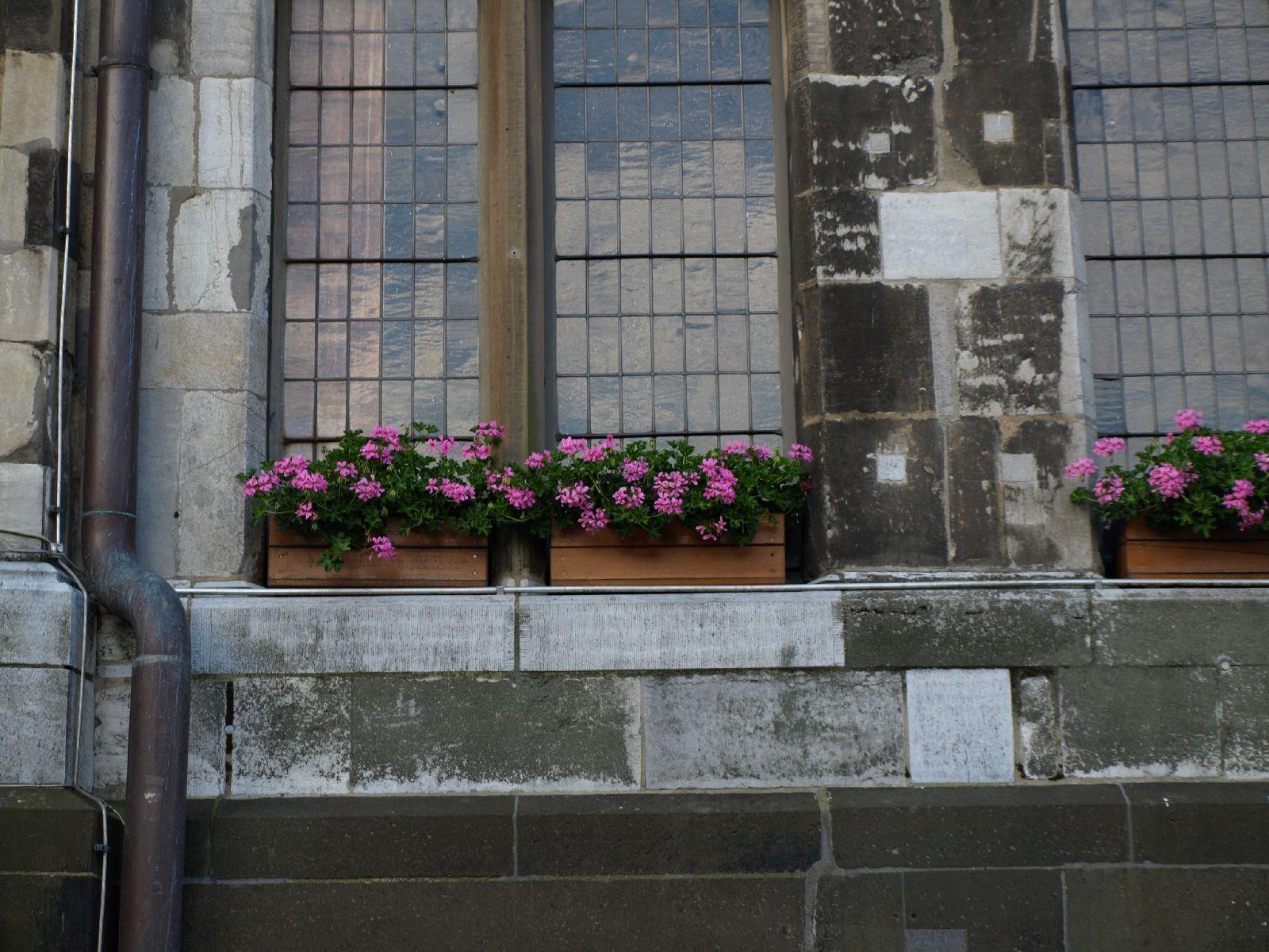 Pflanzen-Blumen-Foto_Textur_B_P6223605