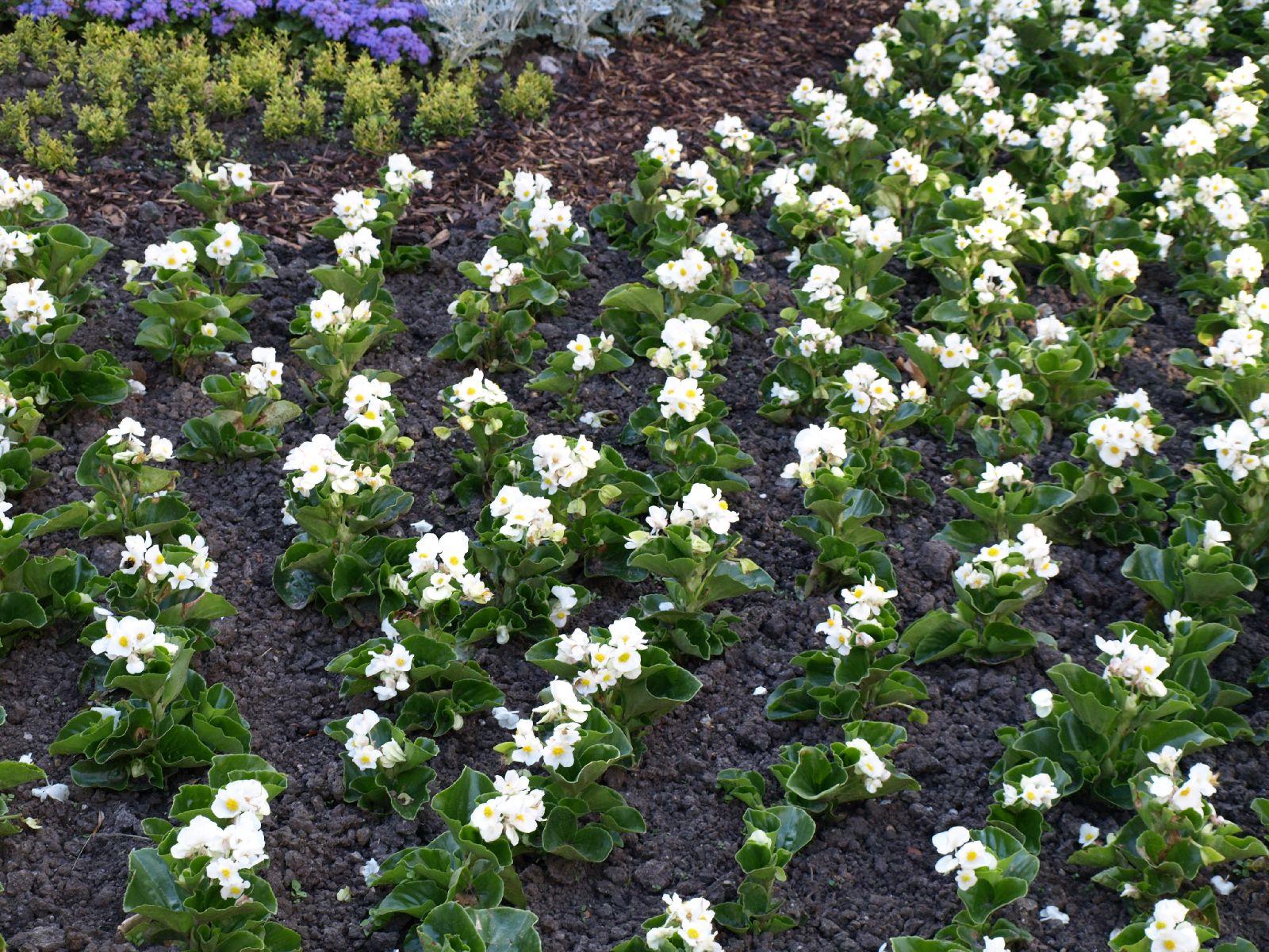 Pflanzen-Blumen-Foto_Textur_B_P6223623