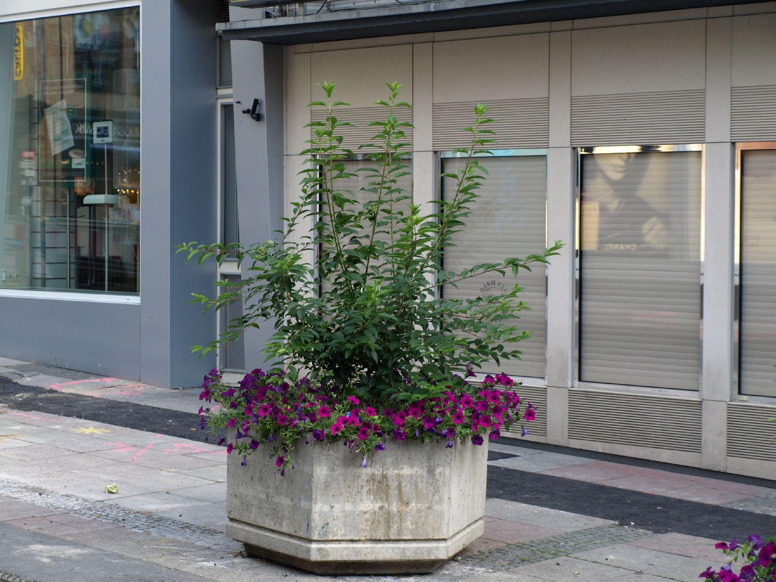 Pflanzen-Blumen-Foto_Textur_B_P6223632