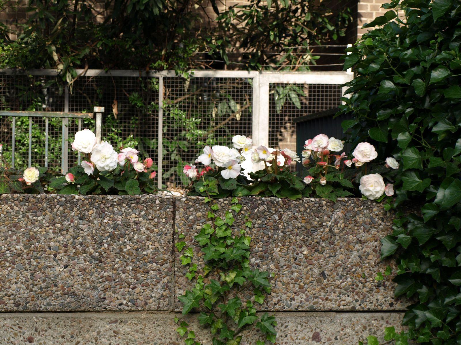 Pflanzen-Blumen-Foto_Textur_B_P6223637