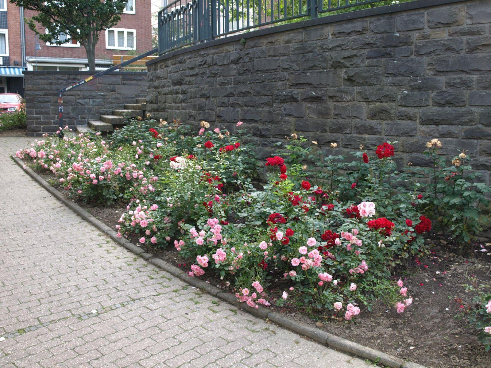 Pflanzen-Blumen-Foto_Textur_B_P6223651