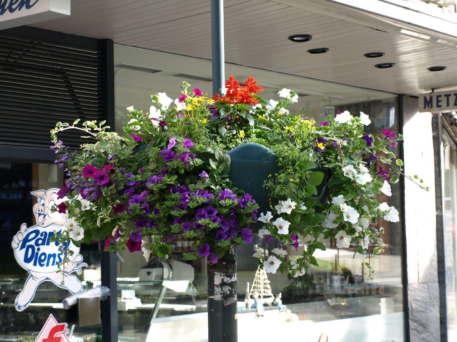Pflanzen-Blumen-Foto_Textur_B_P6223660