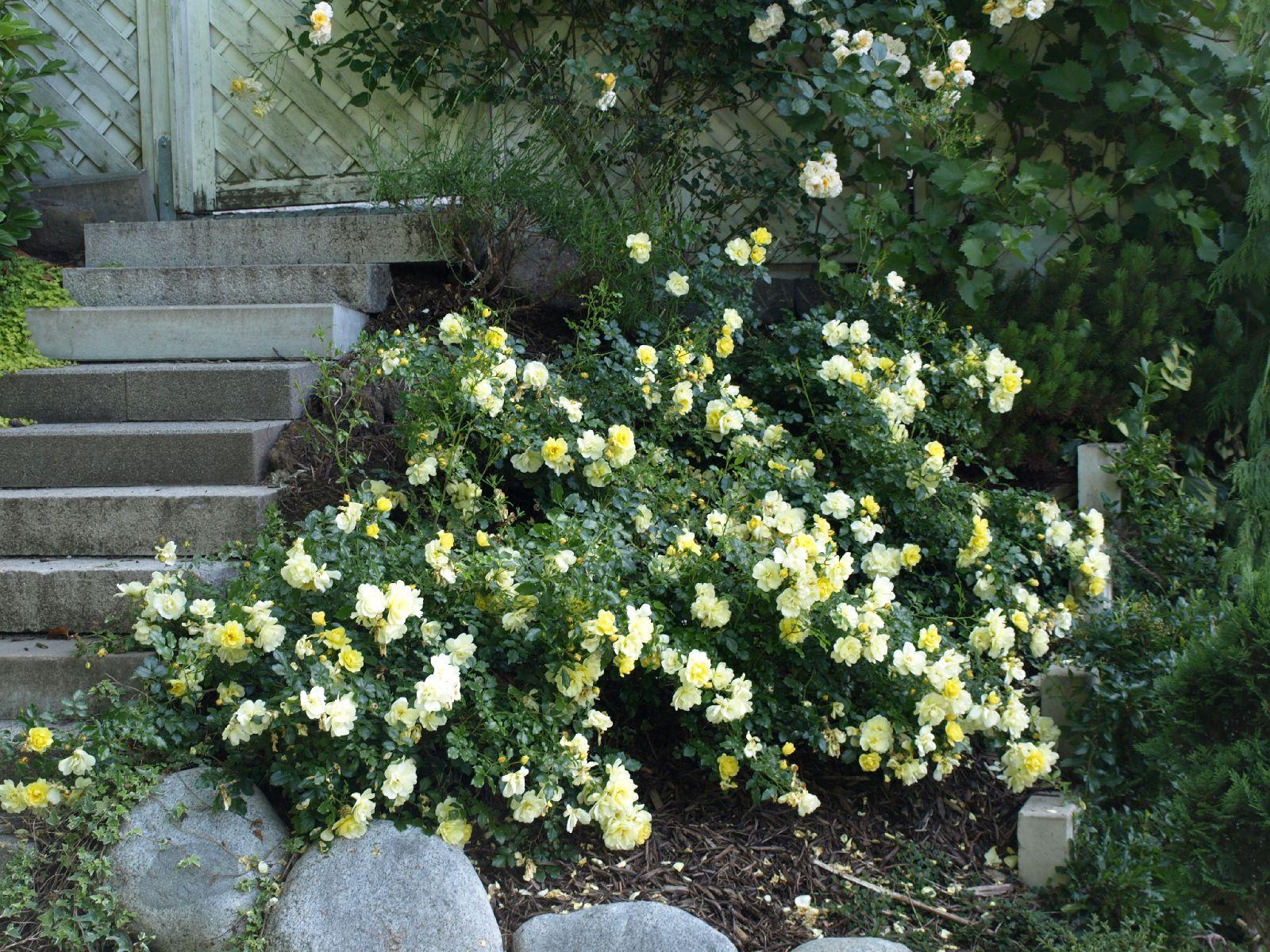 Pflanzen-Blumen-Foto_Textur_B_P6293850