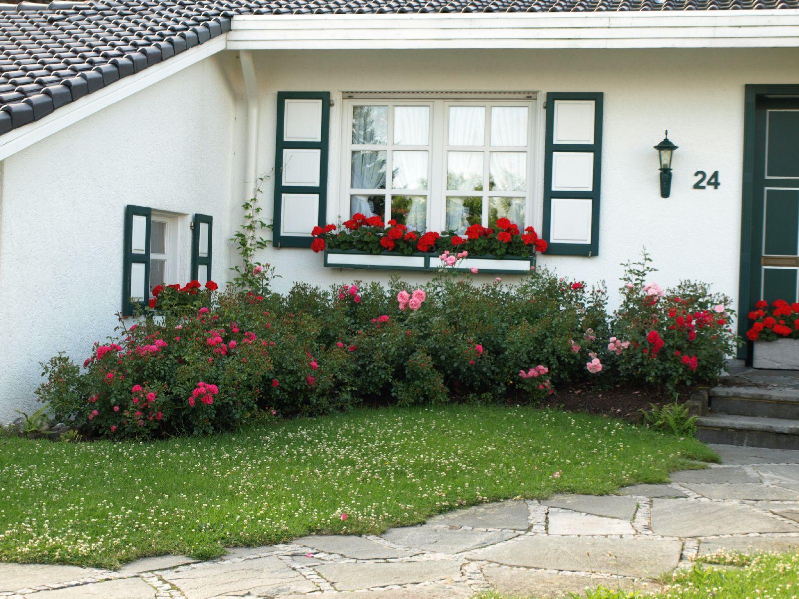 Pflanzen-Blumen-Foto_Textur_B_P6293860