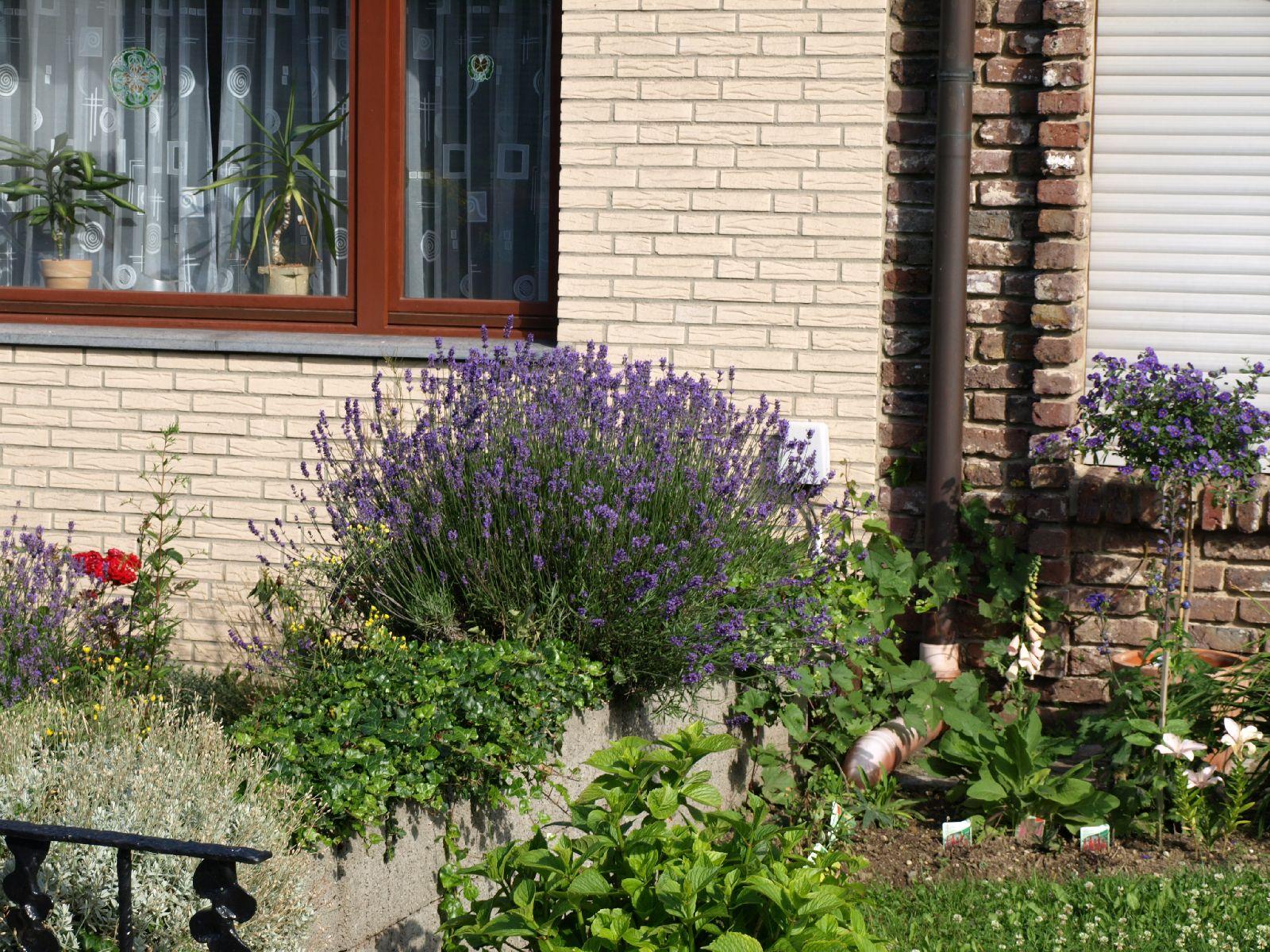 Pflanzen-Blumen-Foto_Textur_B_P6293861