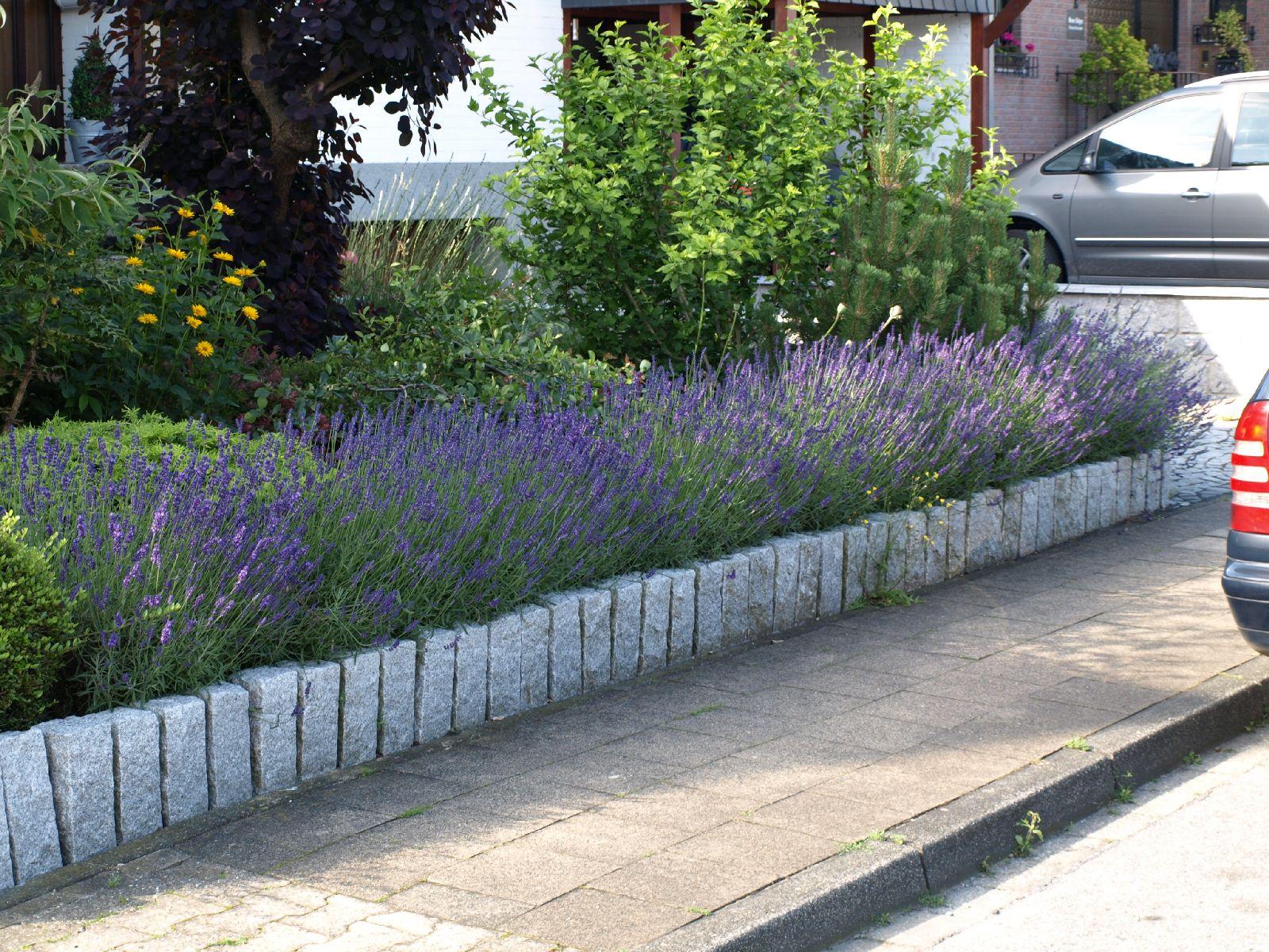 Pflanzen-Blumen-Foto_Textur_B_P6293862