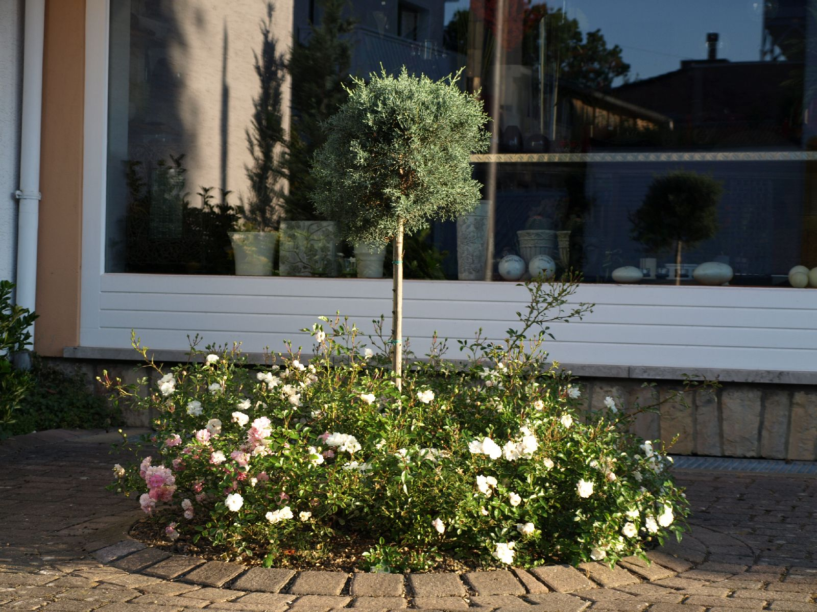 Pflanzen-Blumen-Foto_Textur_B_P7023871