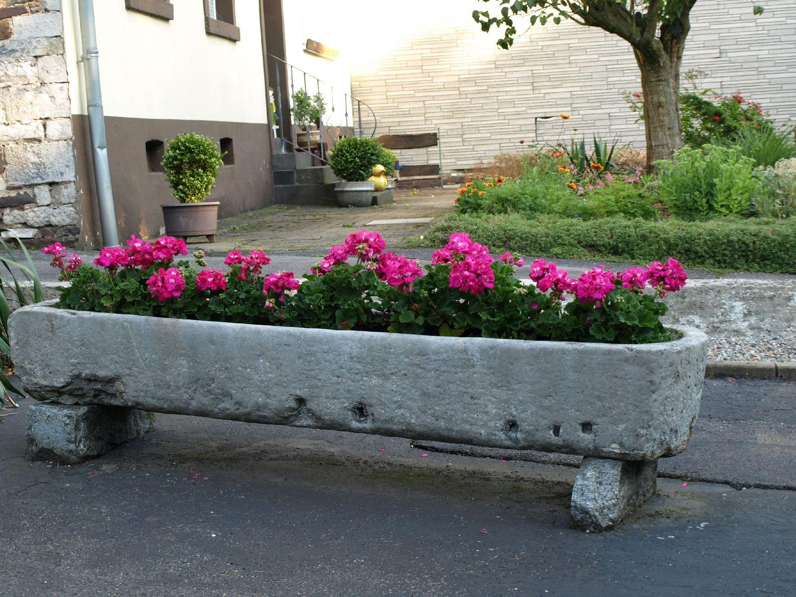Pflanzen-Blumen-Foto_Textur_B_P7053942