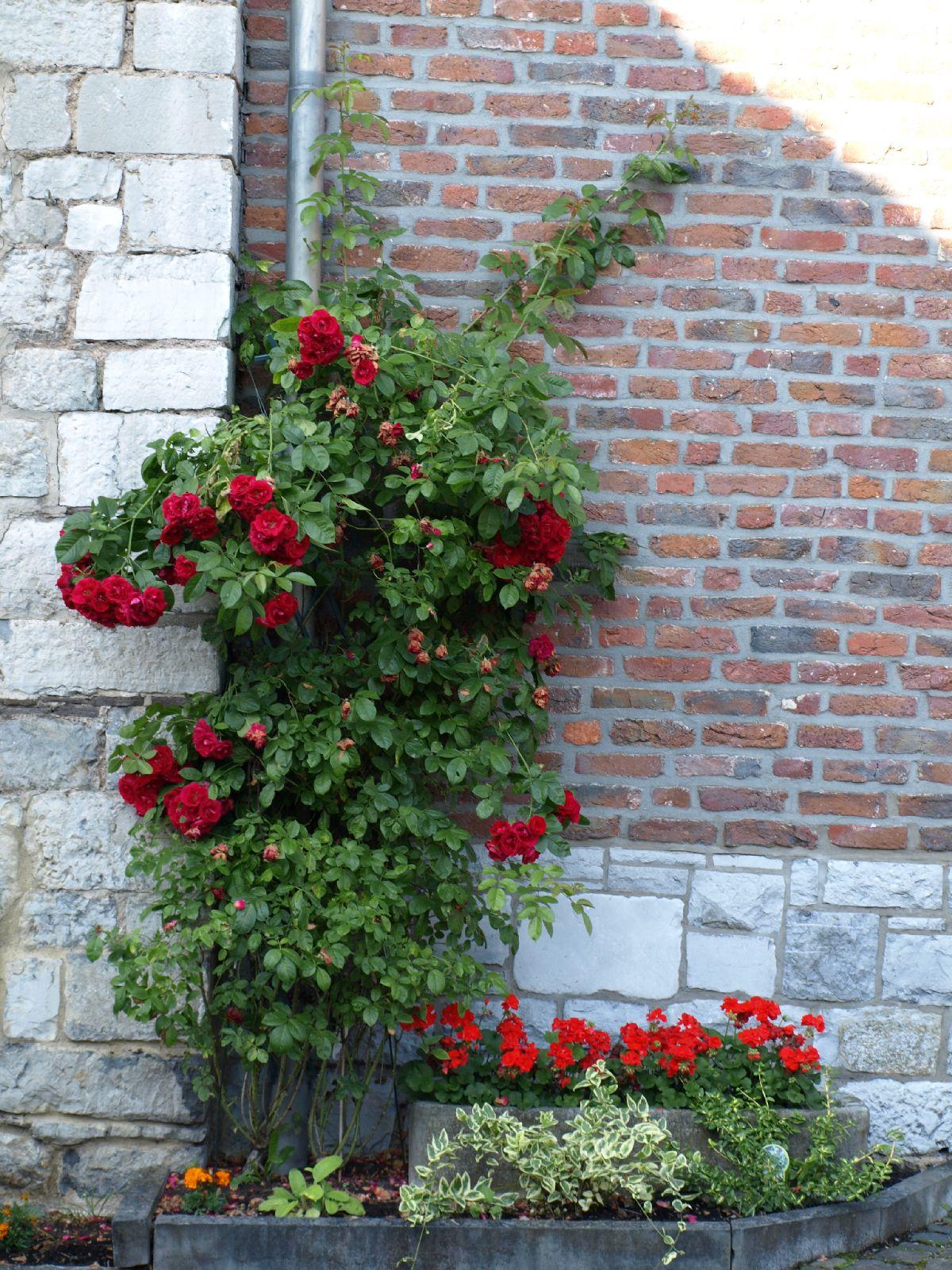 Pflanzen-Blumen-Foto_Textur_B_P7053954