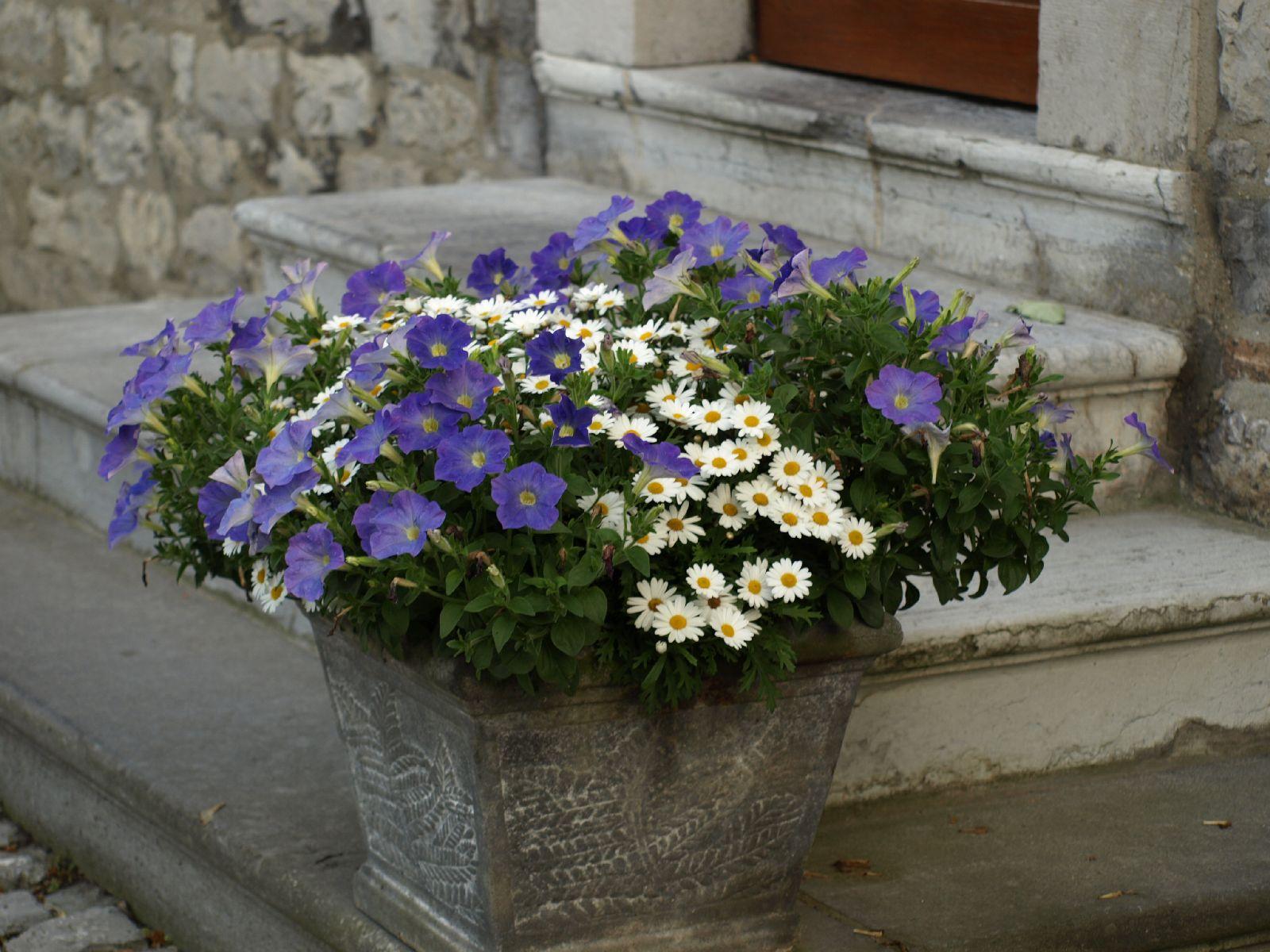Pflanzen-Blumen-Foto_Textur_B_P7128569