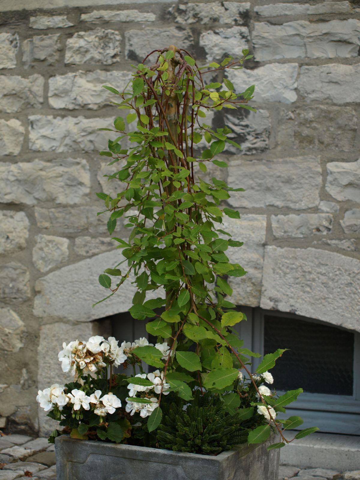 Pflanzen-Blumen-Foto_Textur_B_P7128570