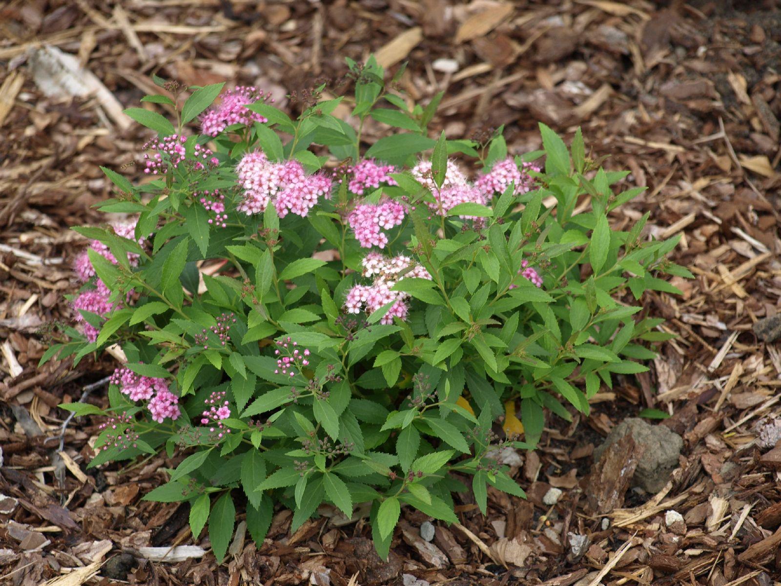 Pflanzen-Blumen-Foto_Textur_B_P7188644