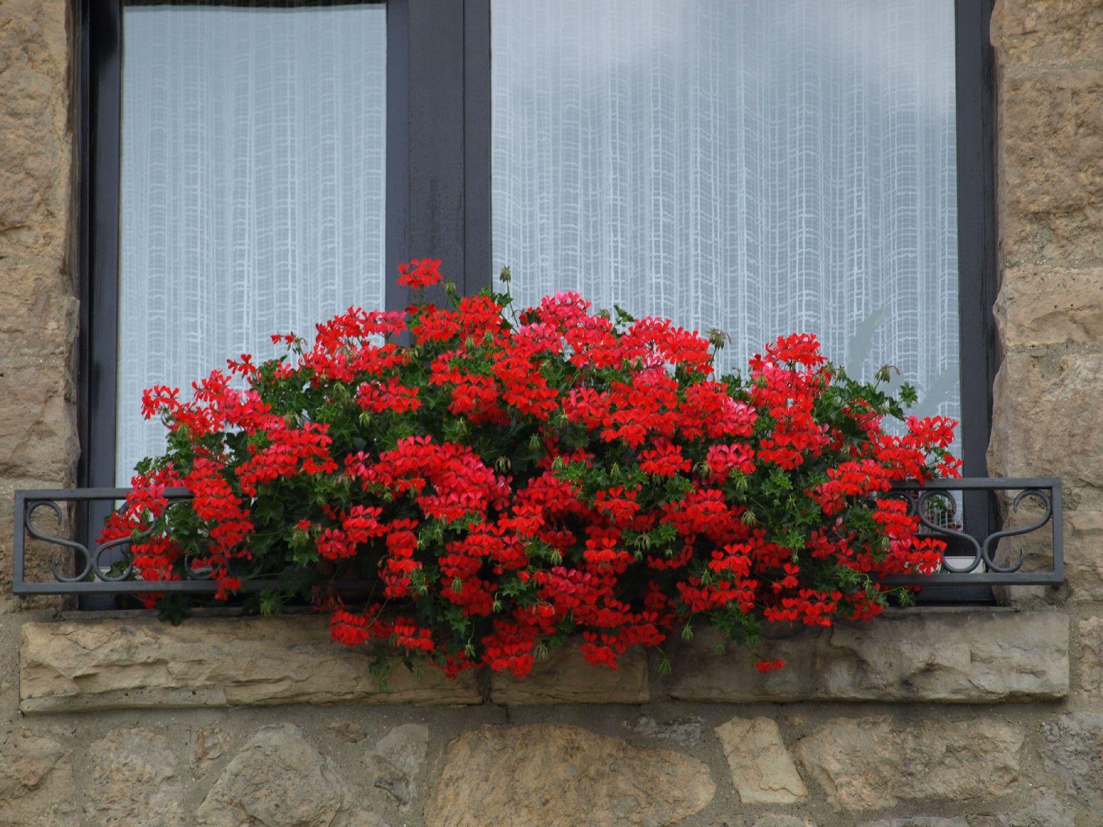 Pflanzen-Blumen-Foto_Textur_B_P8029035