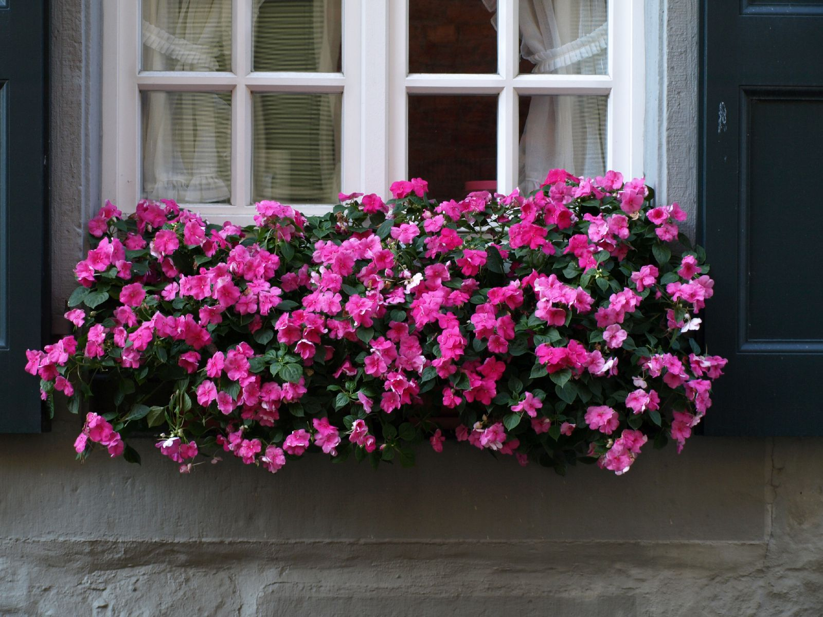 Pflanzen-Blumen-Foto_Textur_B_P8164434