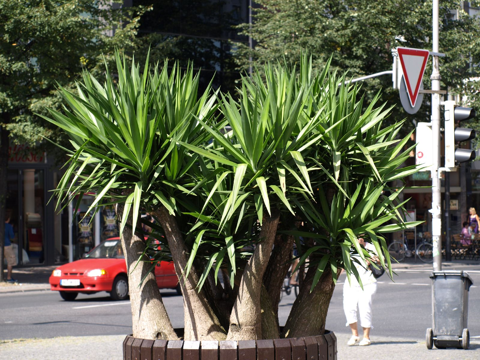 Pflanzen-Blumen-Foto_Textur_B_P8229152
