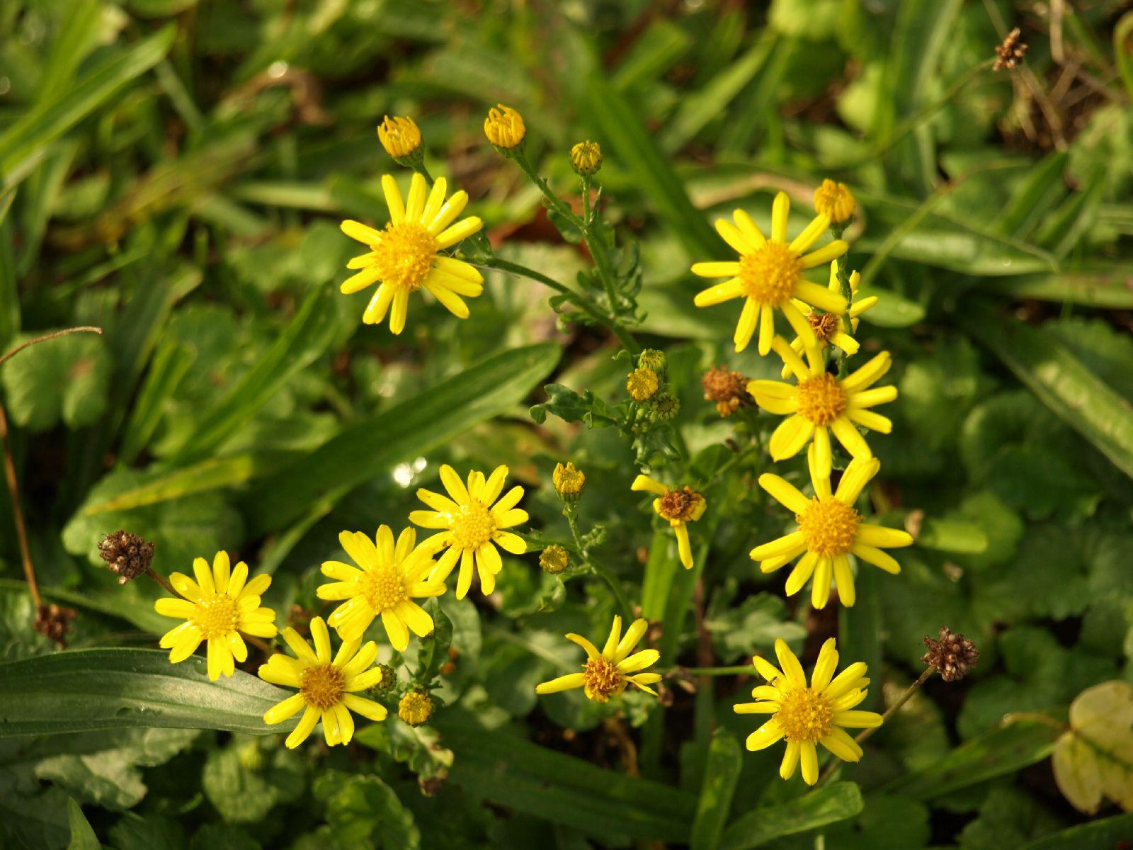 Pflanzen-Blumen-Foto_Textur_B_P9059532