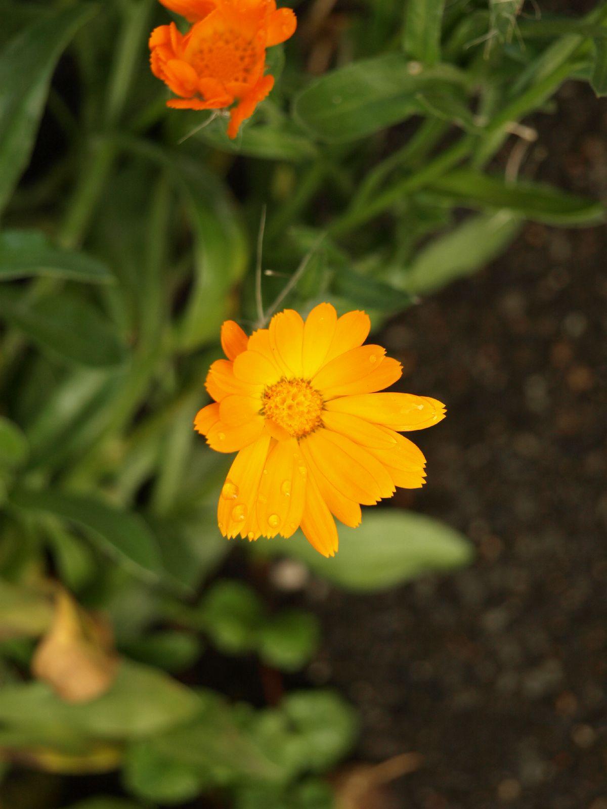 Pflanzen-Blumen-Foto_Textur_B_P9059535