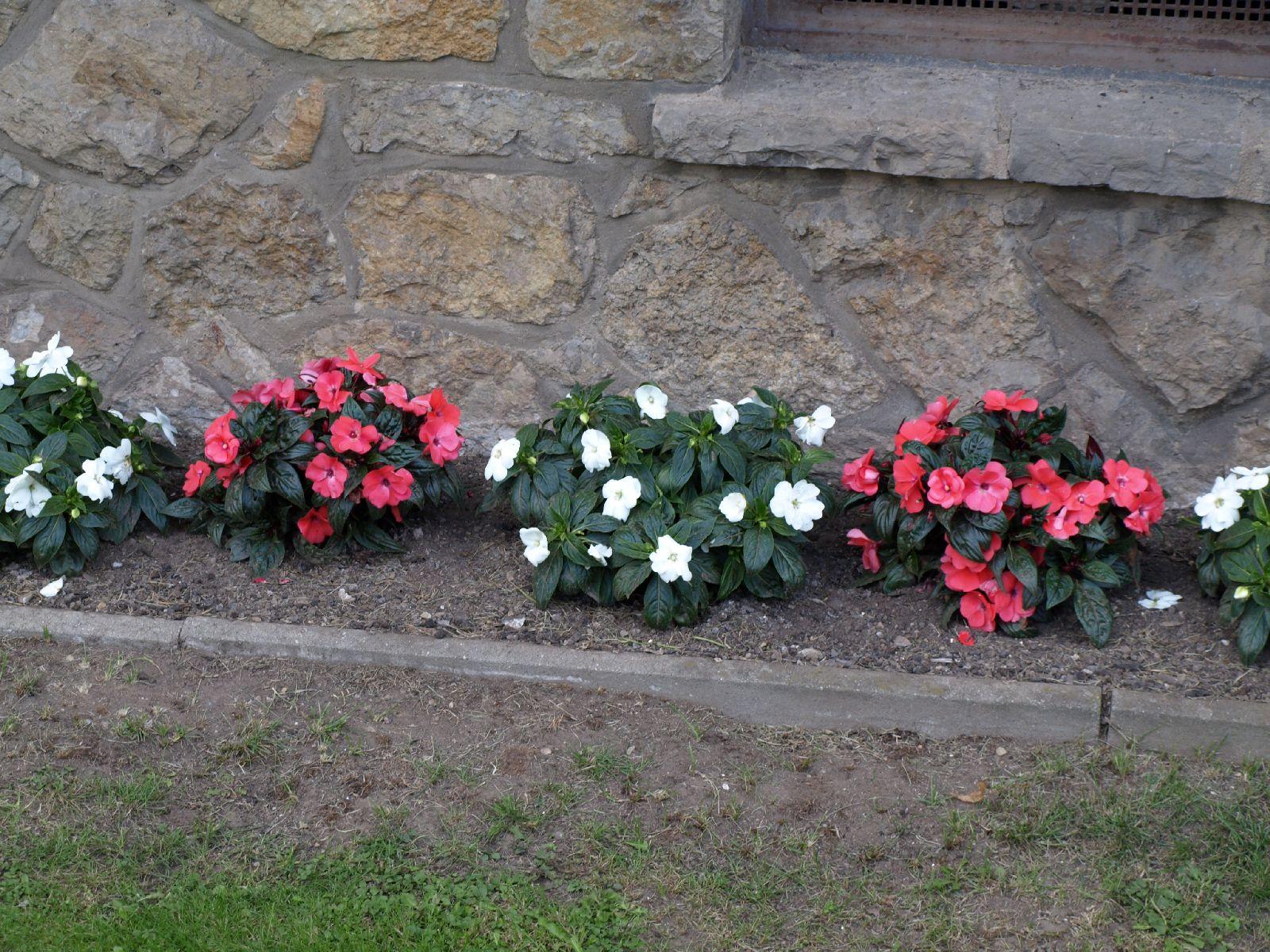Pflanzen-Blumen-Foto_Textur_B_P9195120