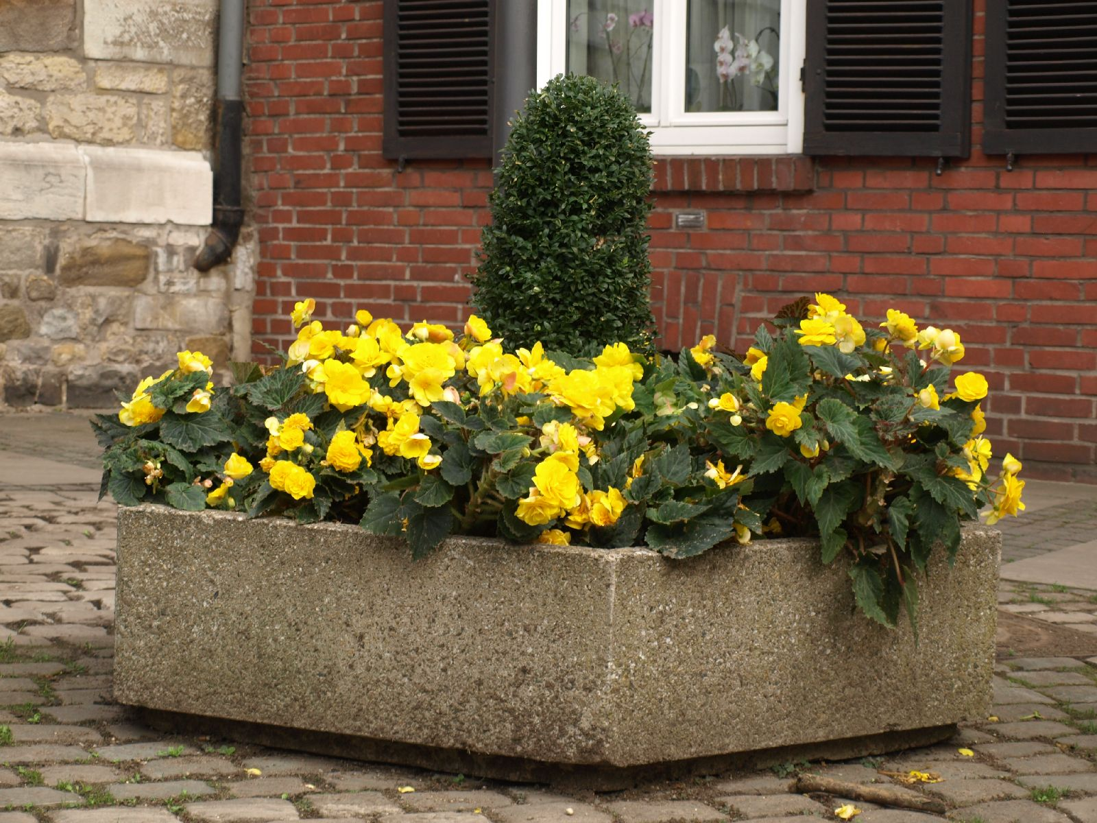 Pflanzen-Blumen-Foto_Textur_B_PA039942